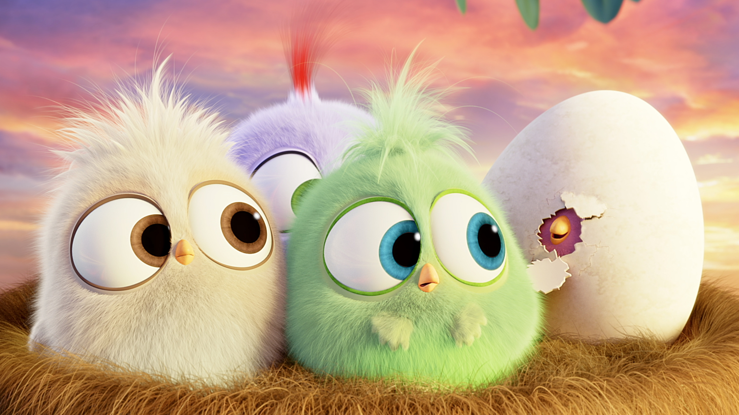 Angry Birds Hatchlings Wallpaper 4k Ultra Hd Id 3971
