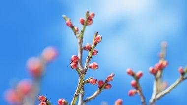 Flower buds 5k 2560x1600