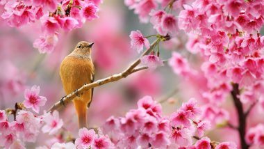 Wallpapers ID:7716