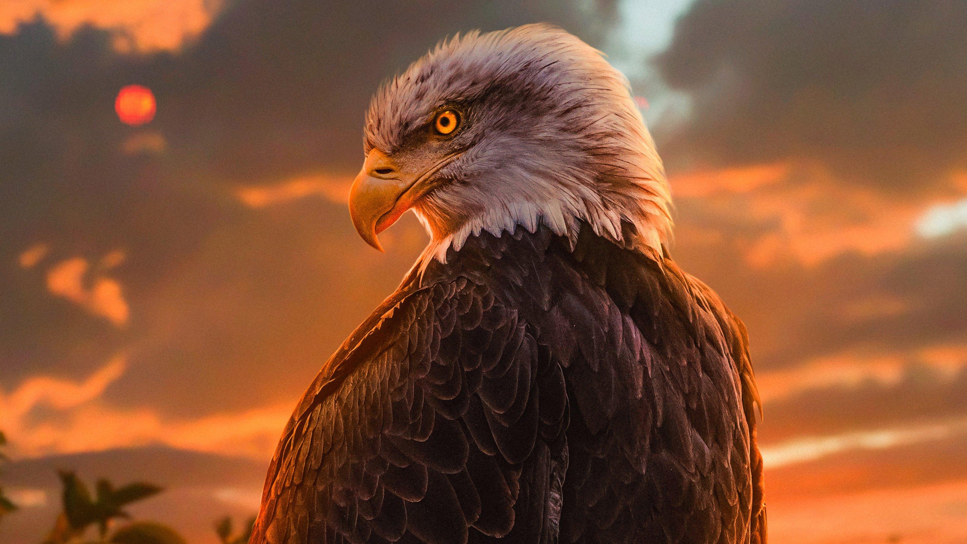 Wallpaper Eagle