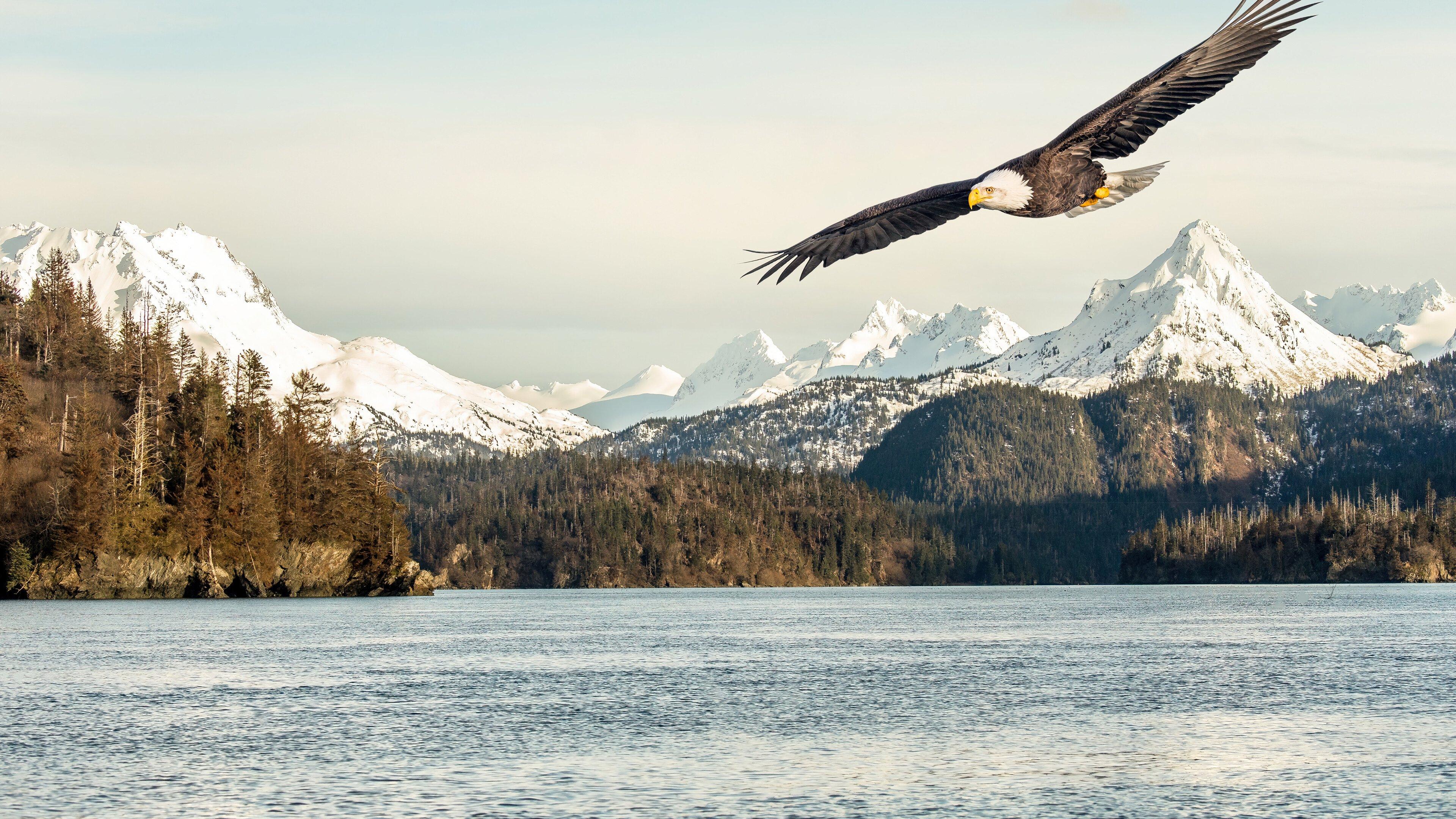 Wallpaper Eagle flying over lake