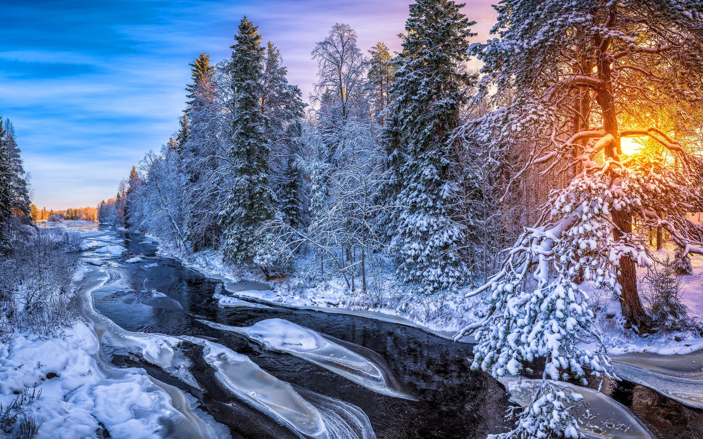 Wallpaper Sunrise in forest in Finland