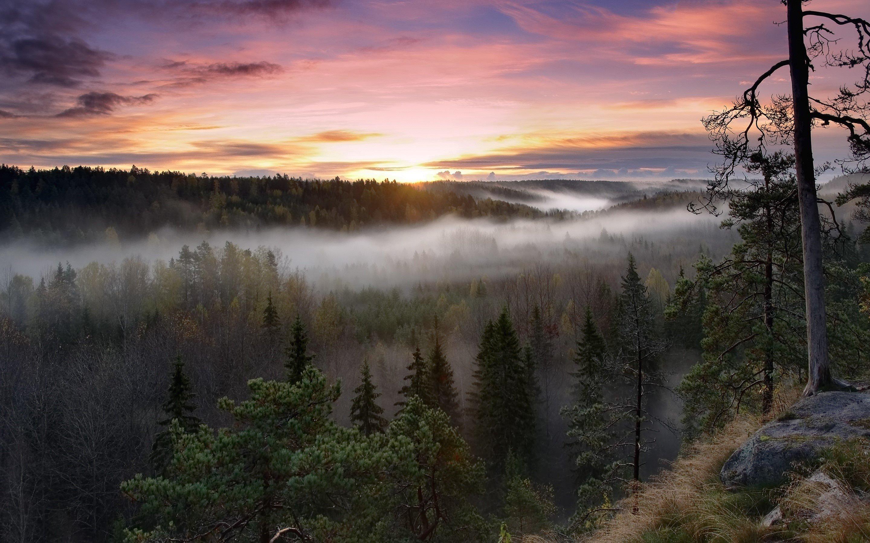 Fondos de pantalla Amanecer nebloso en el Parque Nacional