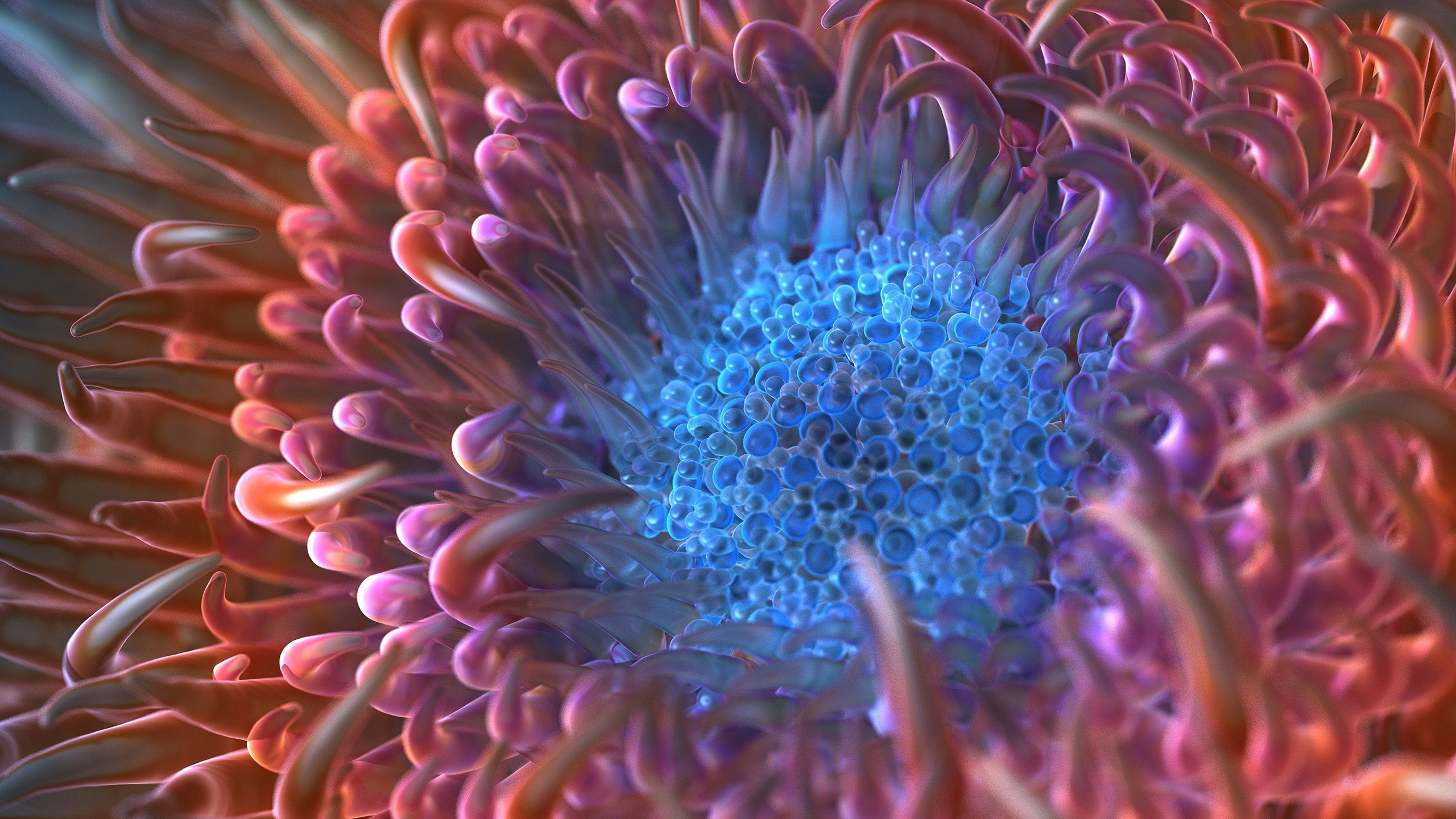 Wallpaper Digital anemone