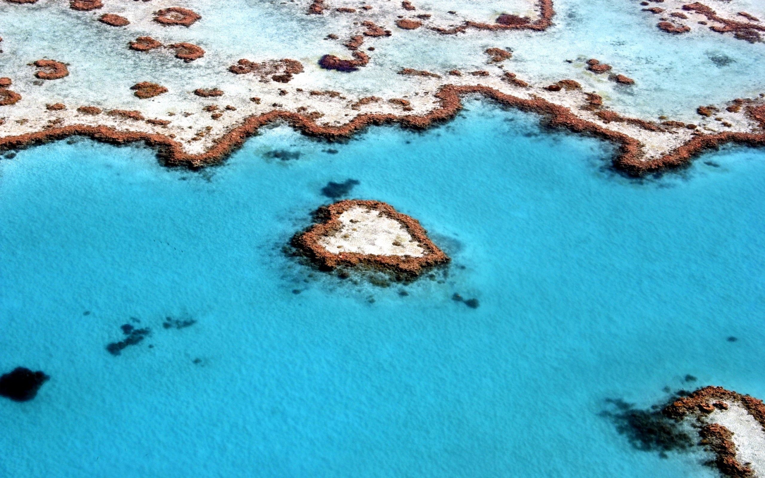 Wallpaper Reef in the shape of a heart