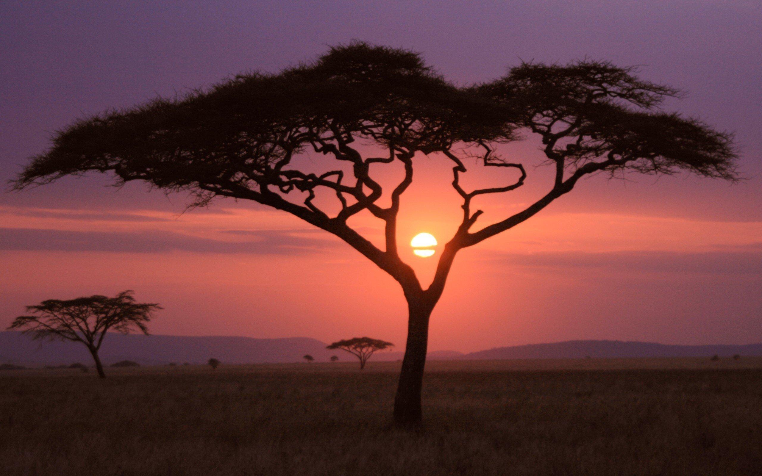 Wallpaper Sunset in Africa
