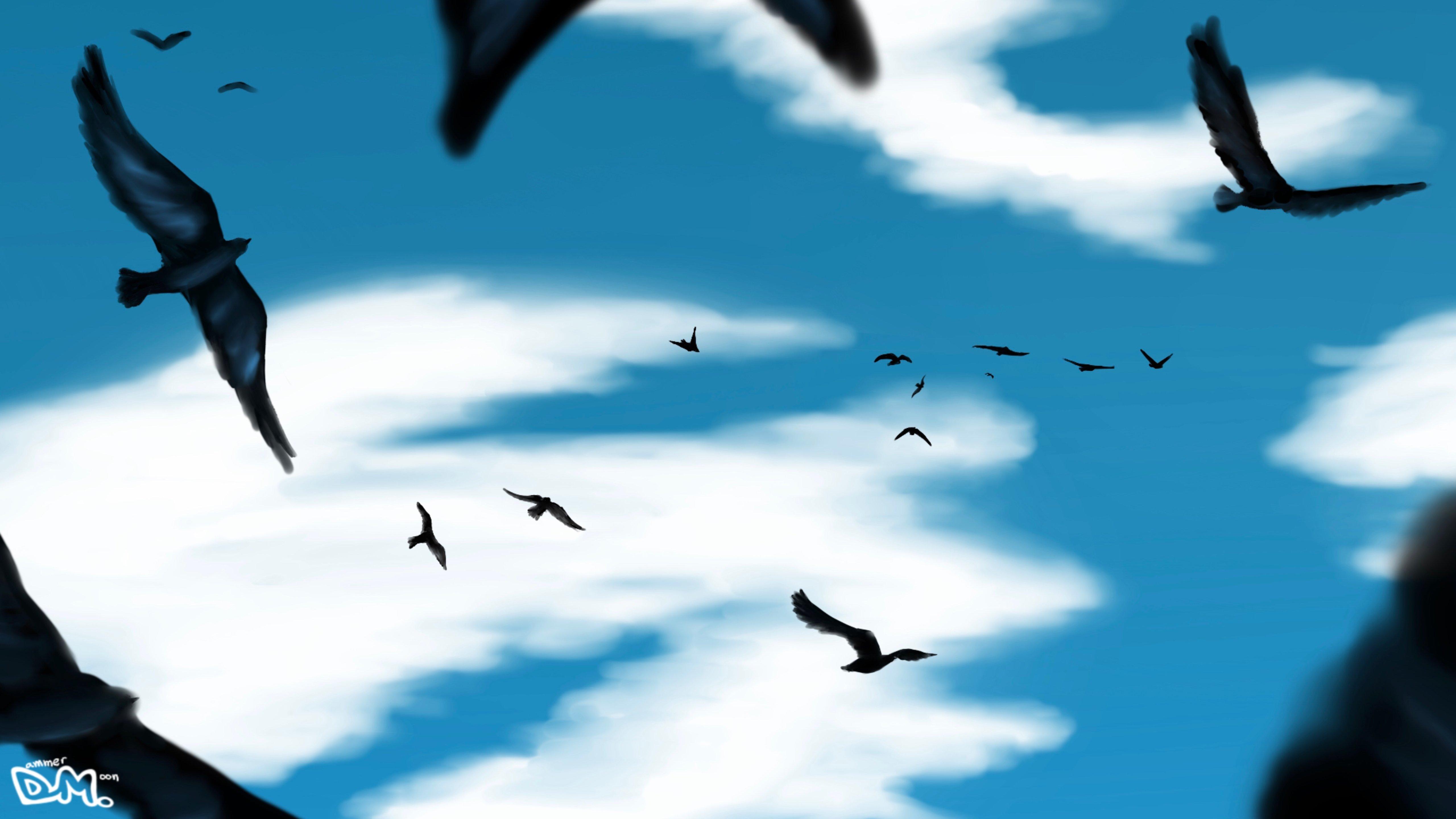 Wallpaper Birds flying in the sky