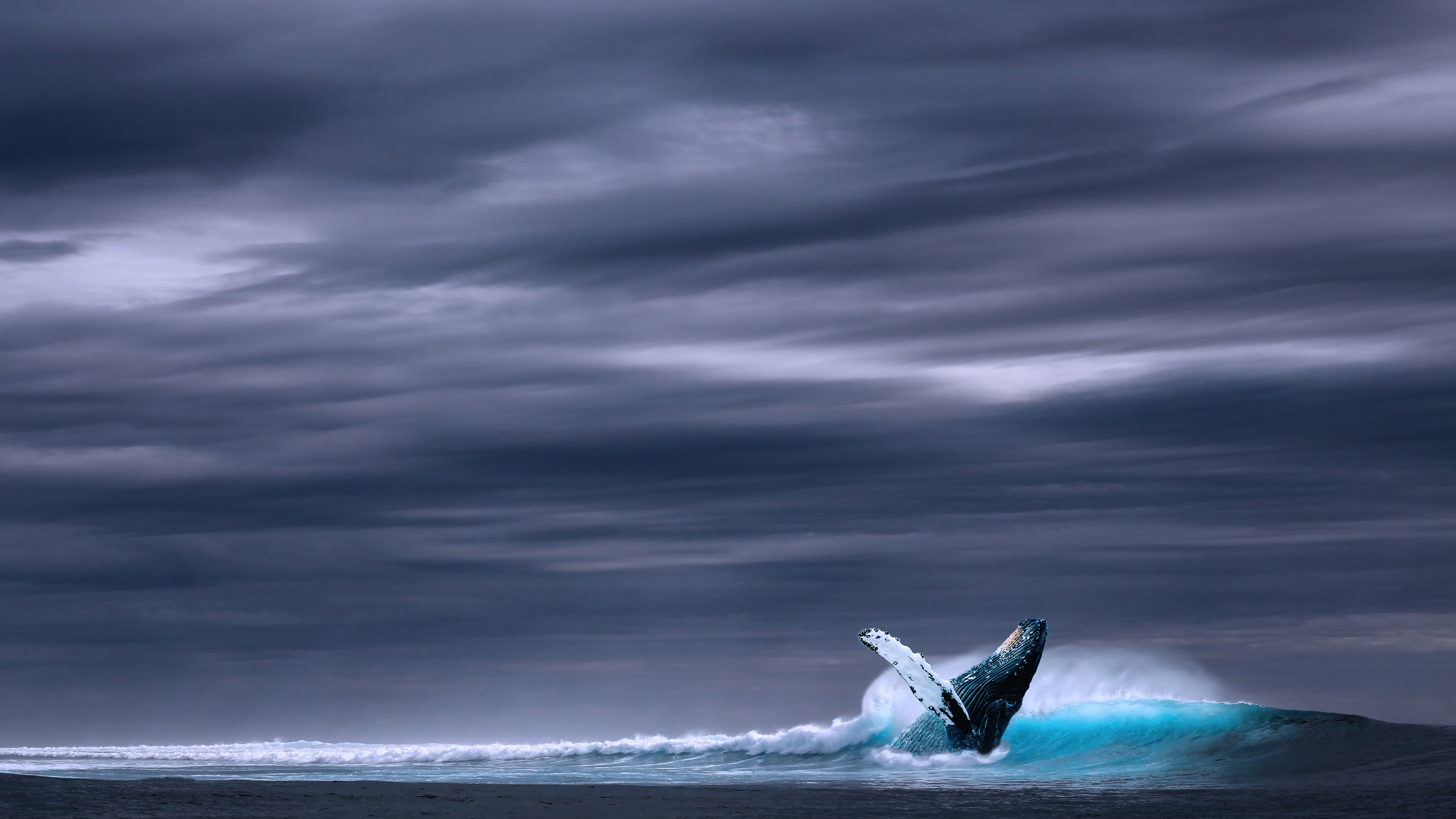 Wallpaper Whale jumping in the sea