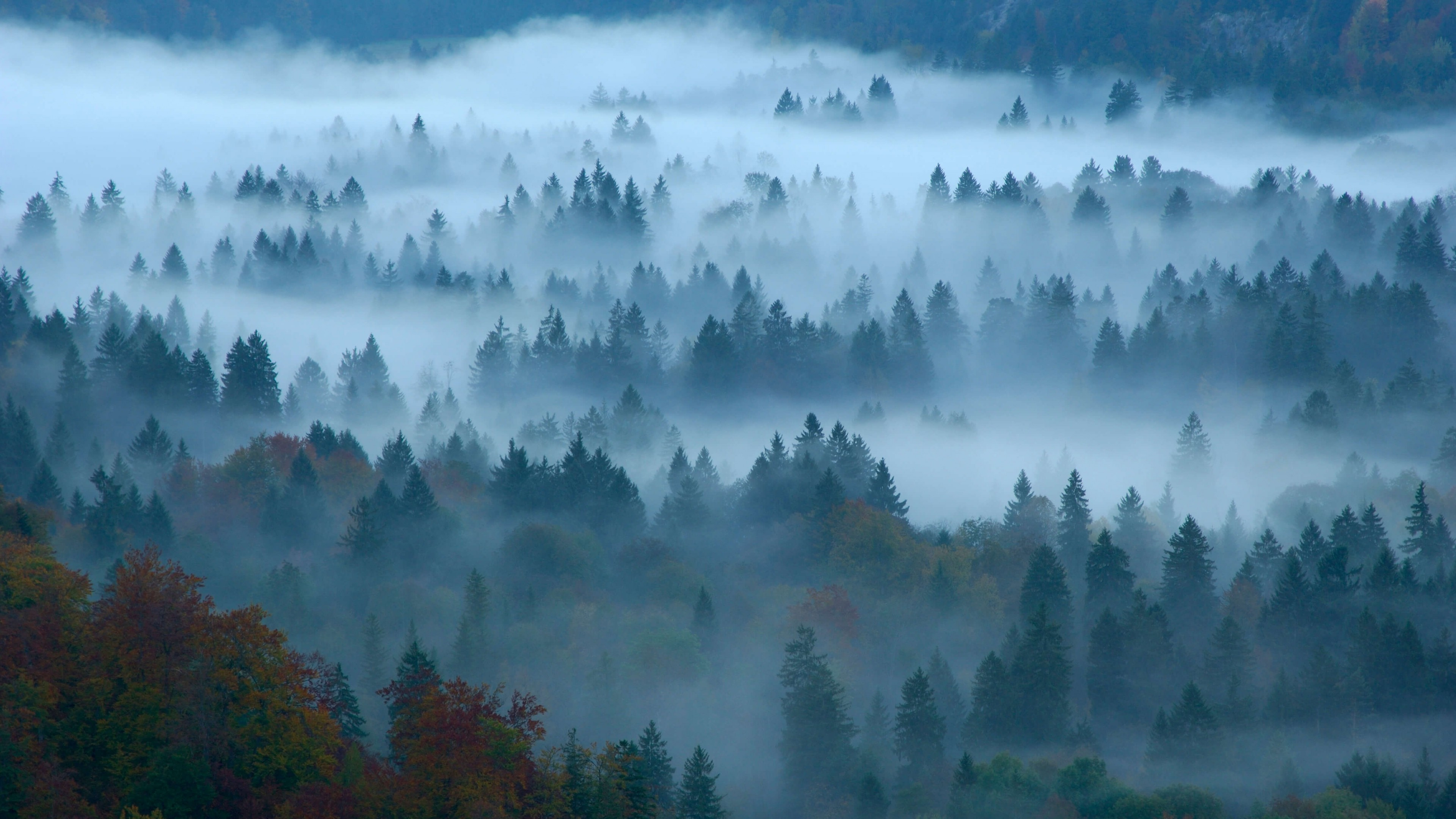 Fondos de pantalla Bosque con niebla