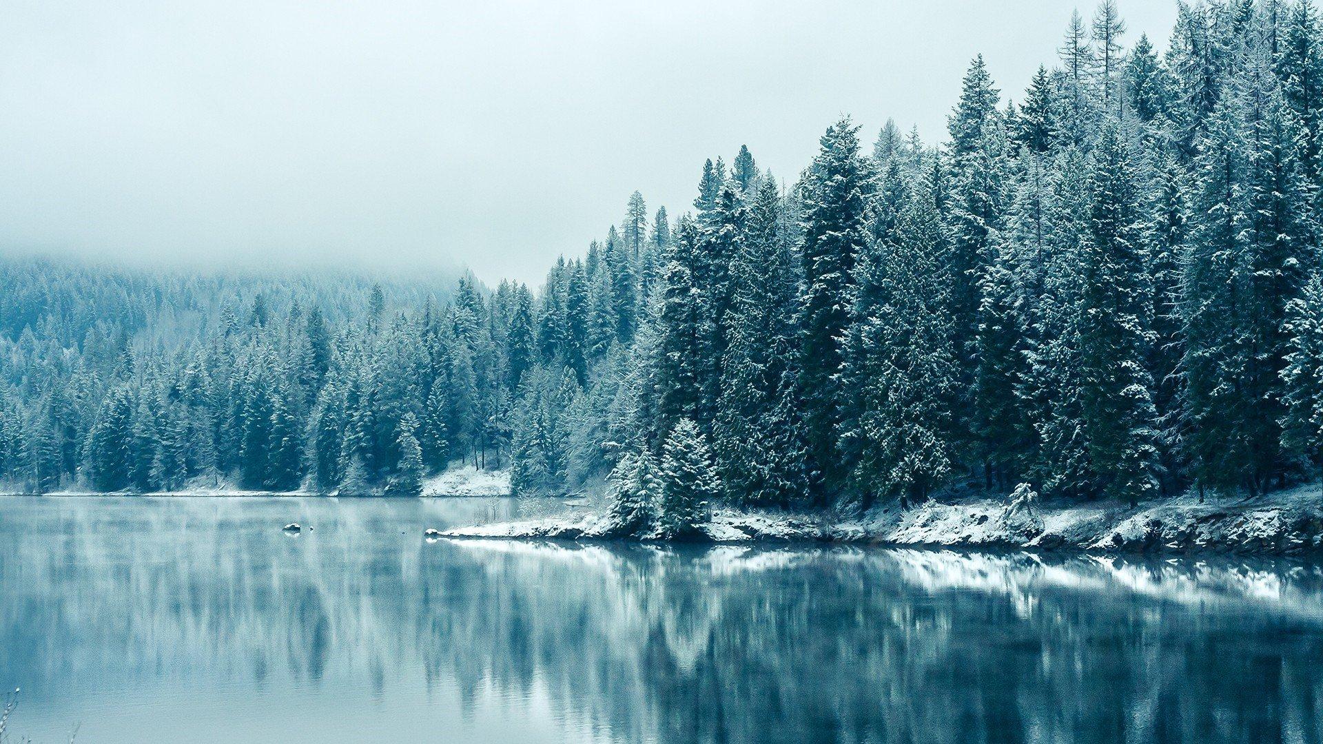 Fondo de pantalla de Bosque congelado Imágenes