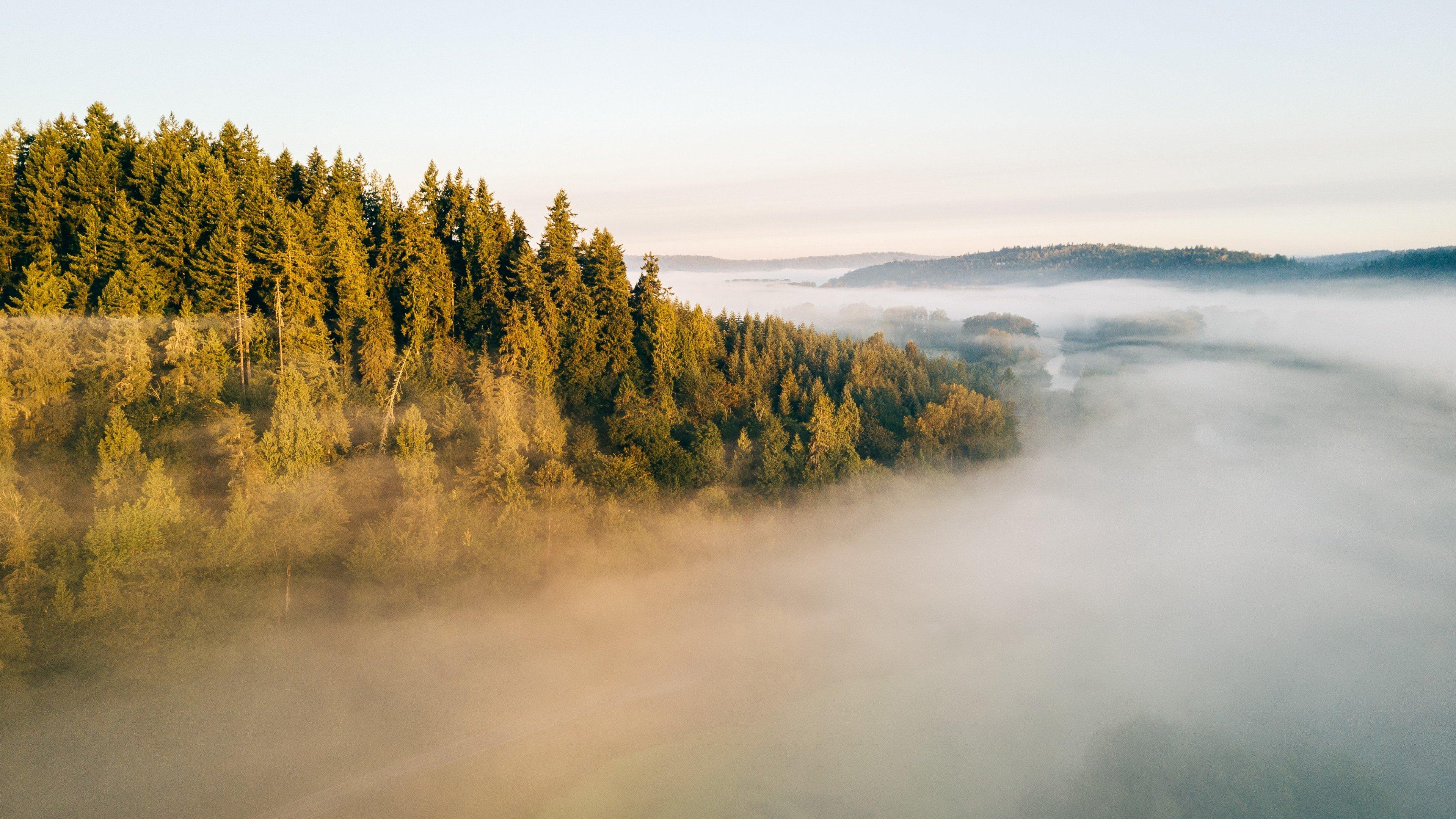 Fondos de pantalla Bosque en la niebla