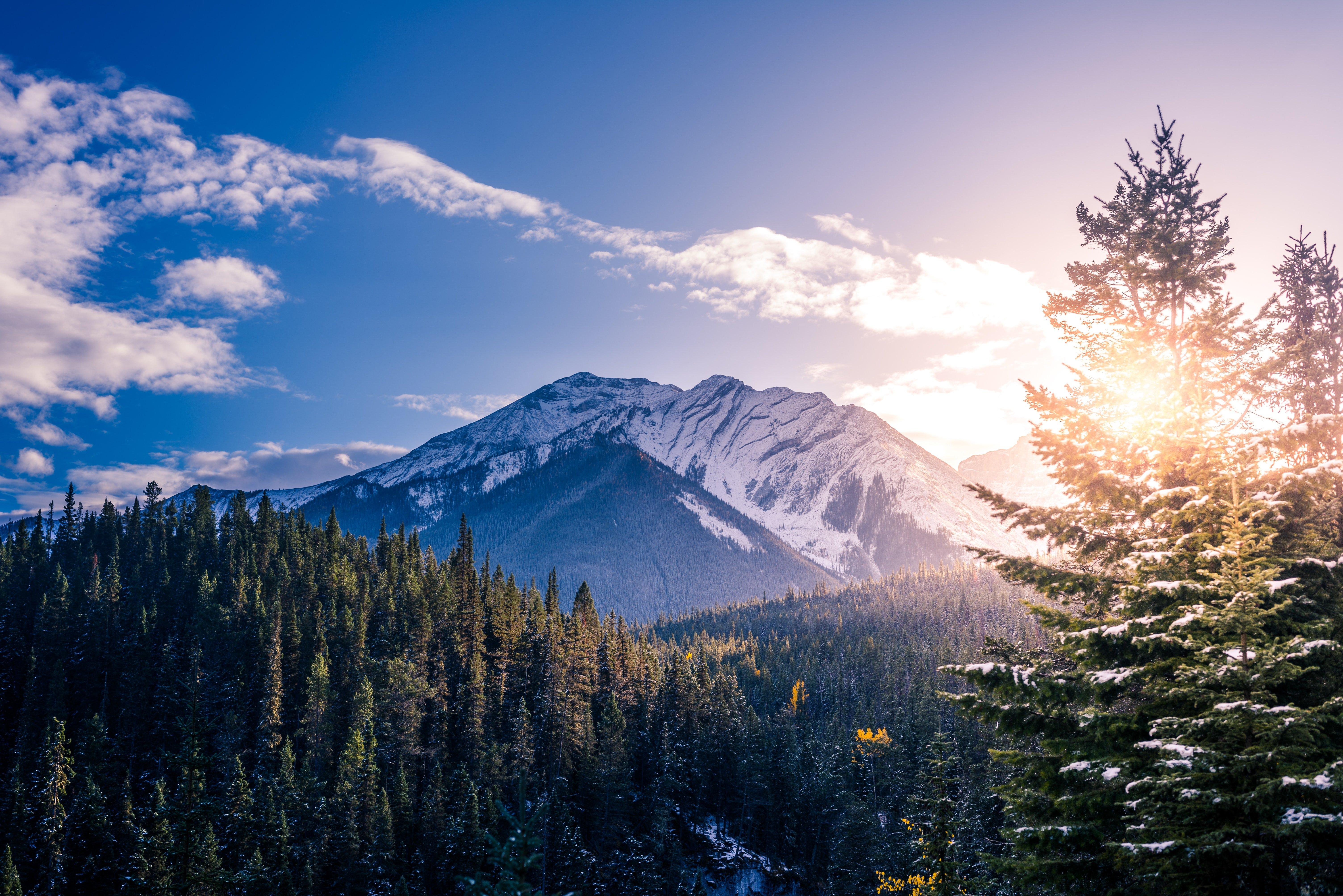 Fondos de pantalla Bosque en las montañas al amanecer