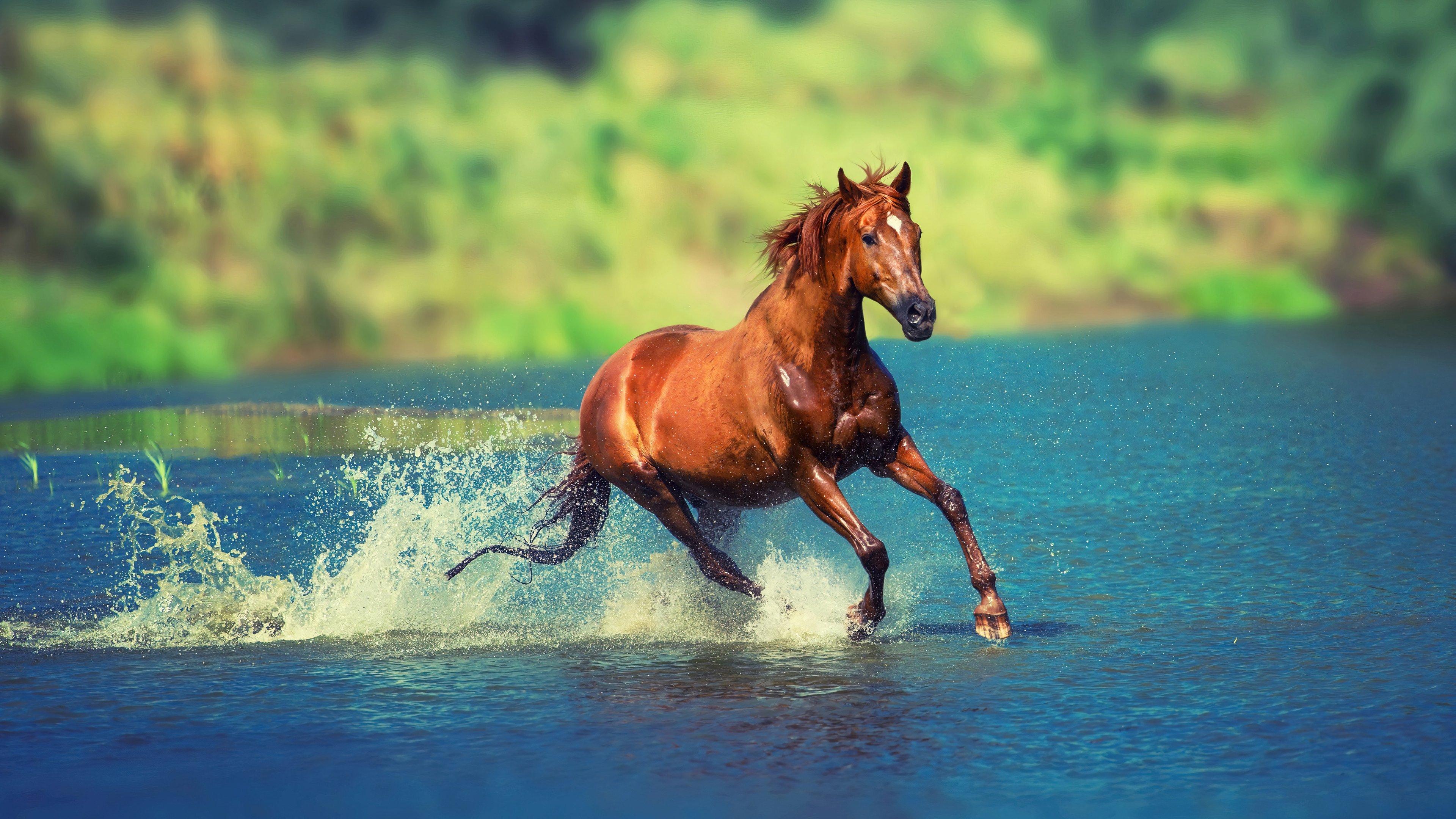 Wallpaper Horse running through water