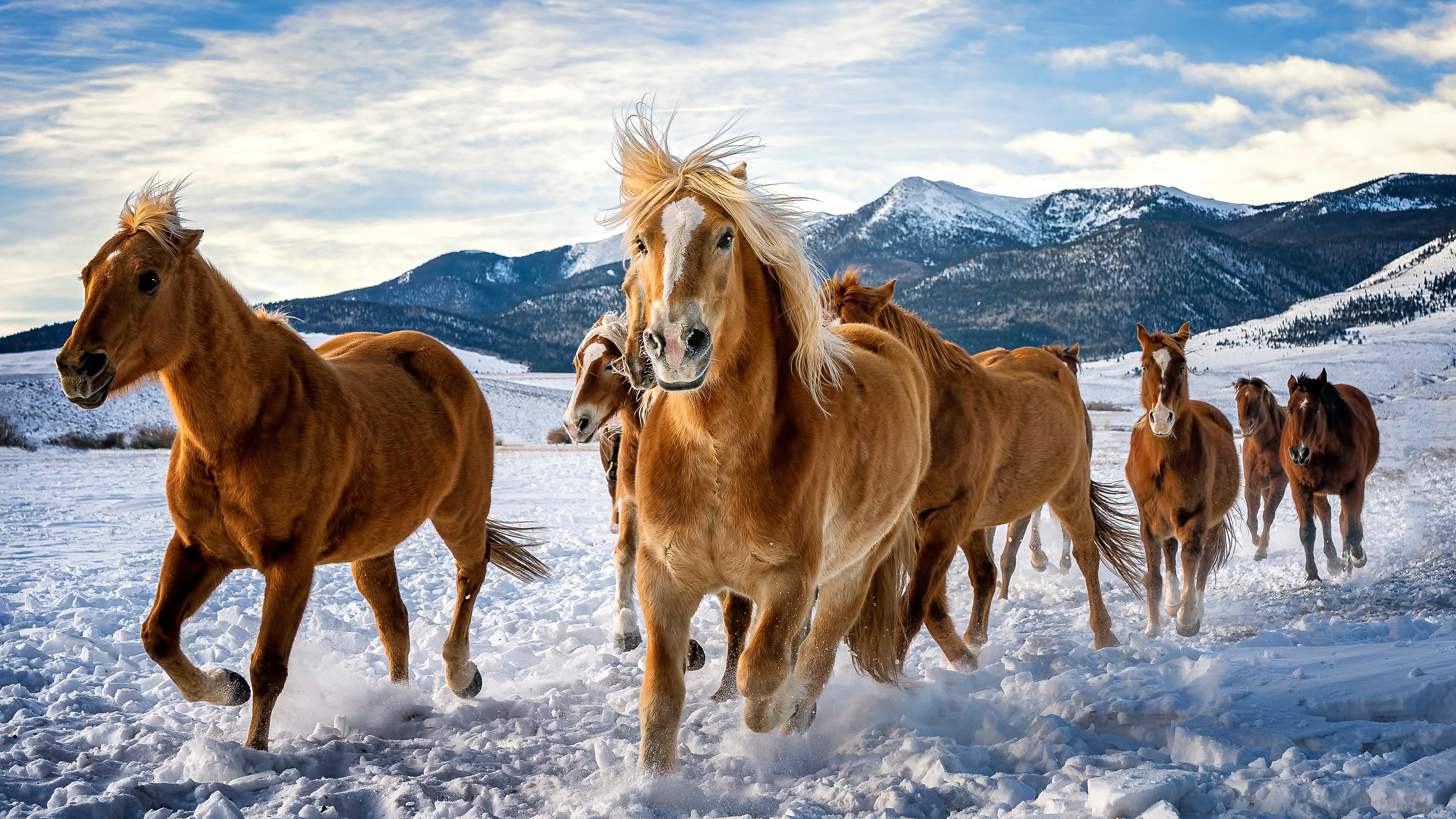 Wallpaper Horses running in the snow