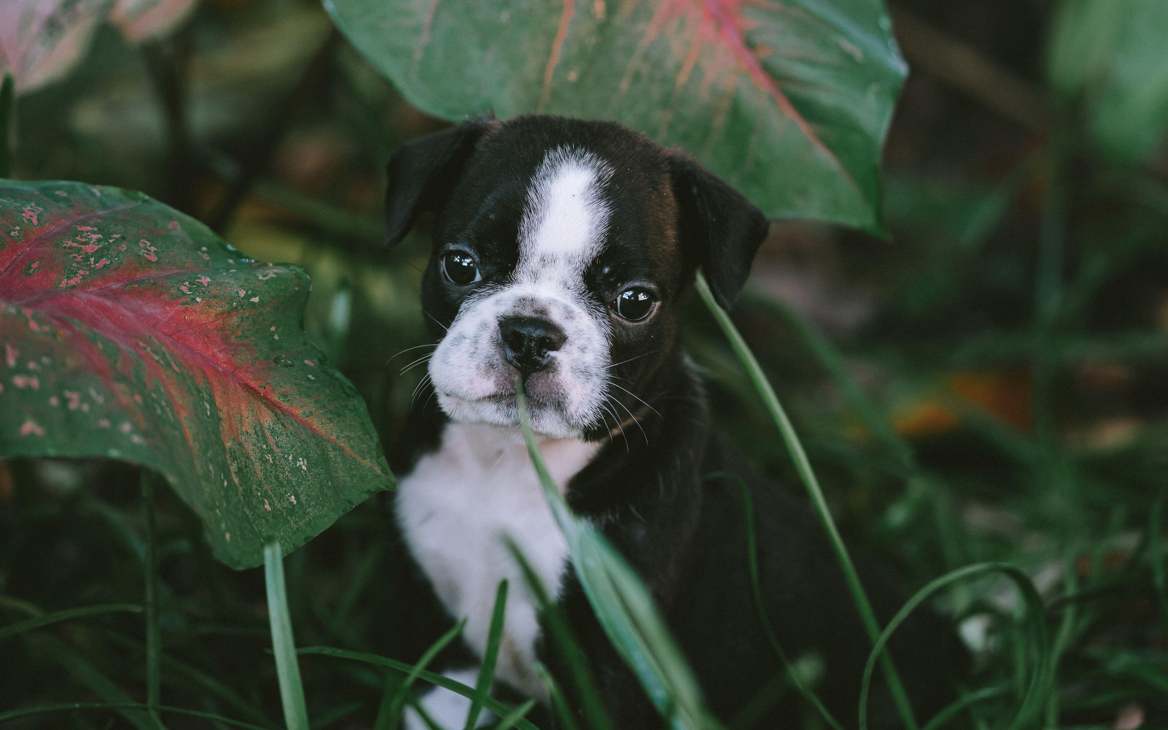 Fondos de pantalla Cachorro en jardín