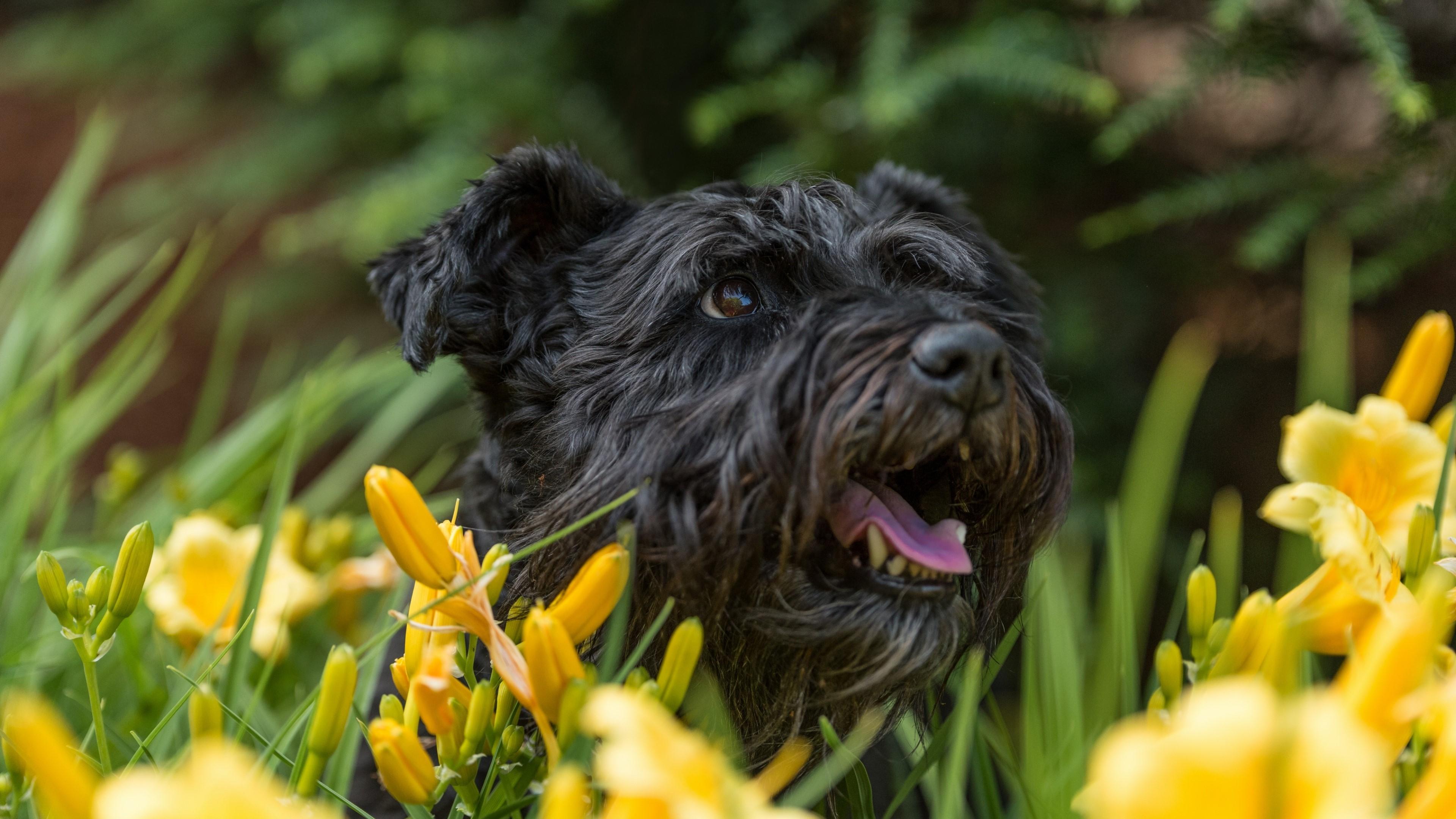 Fondos de pantalla Cachorro en un jardín