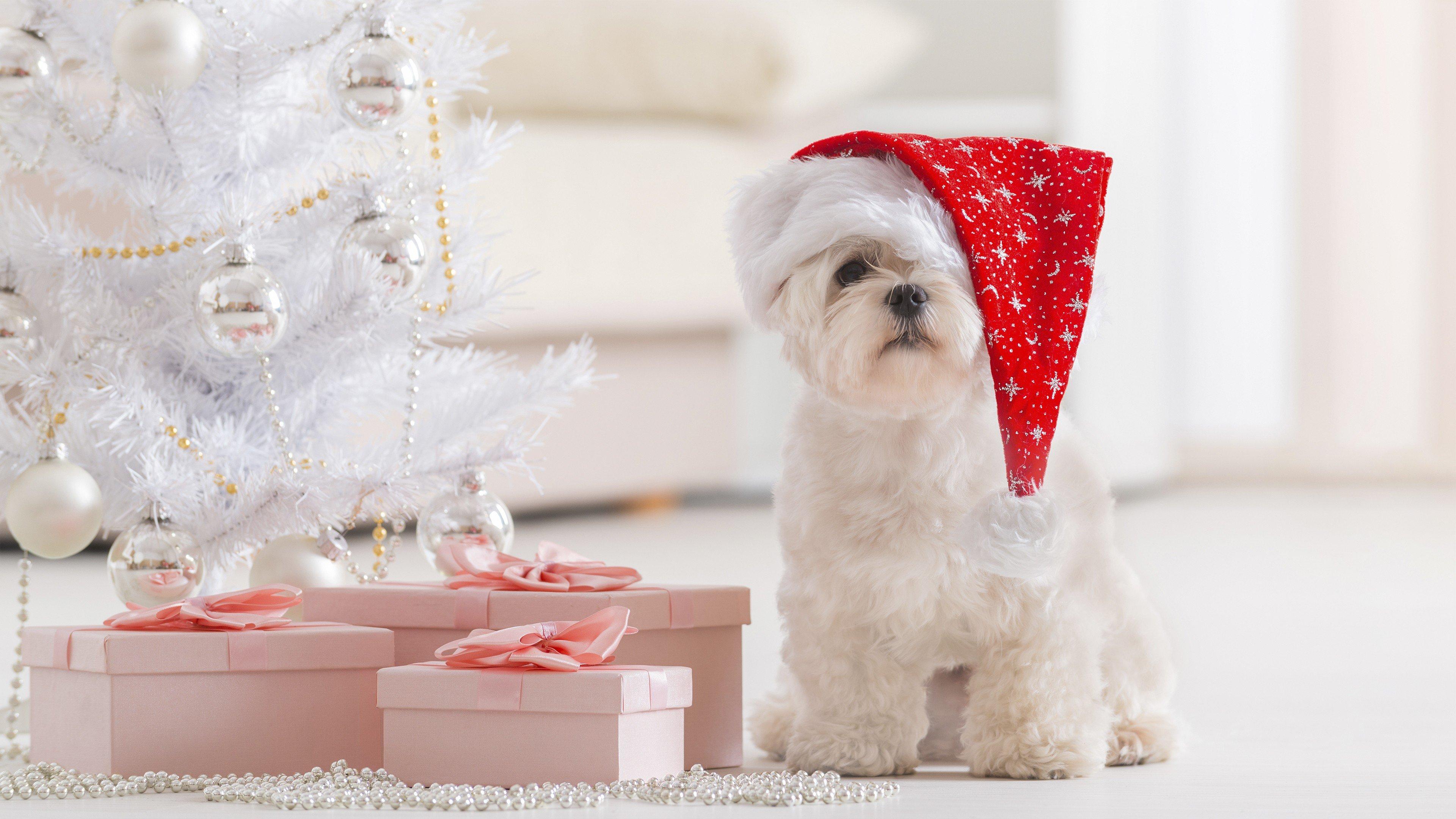 Fondos de pantalla Cachorro festejando Navidad