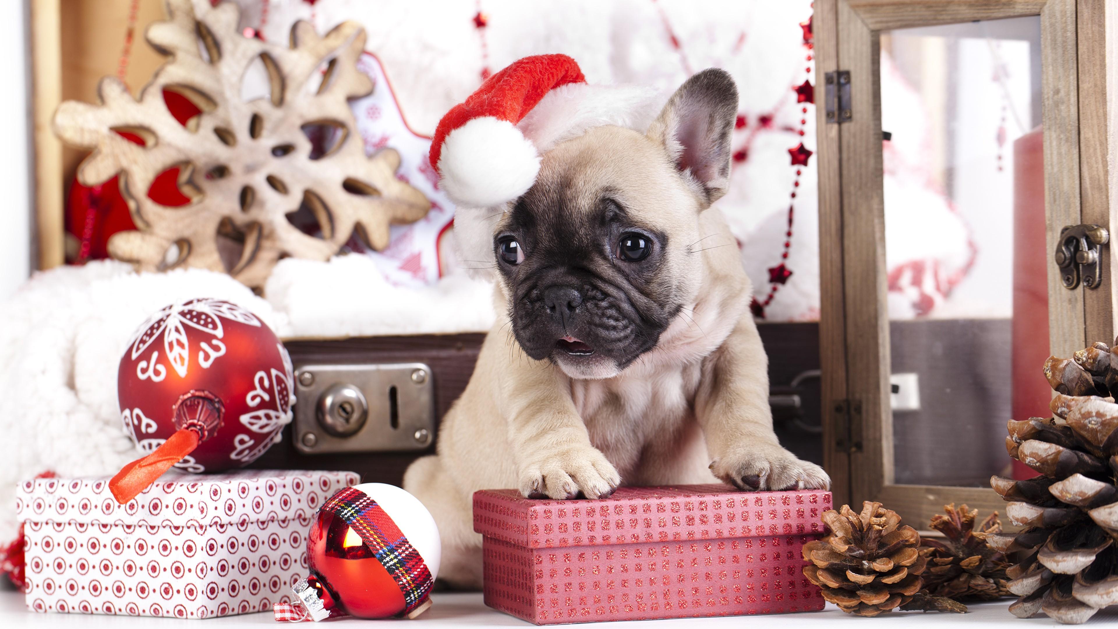 Wallpaper Pug puppy celebrating Christmas