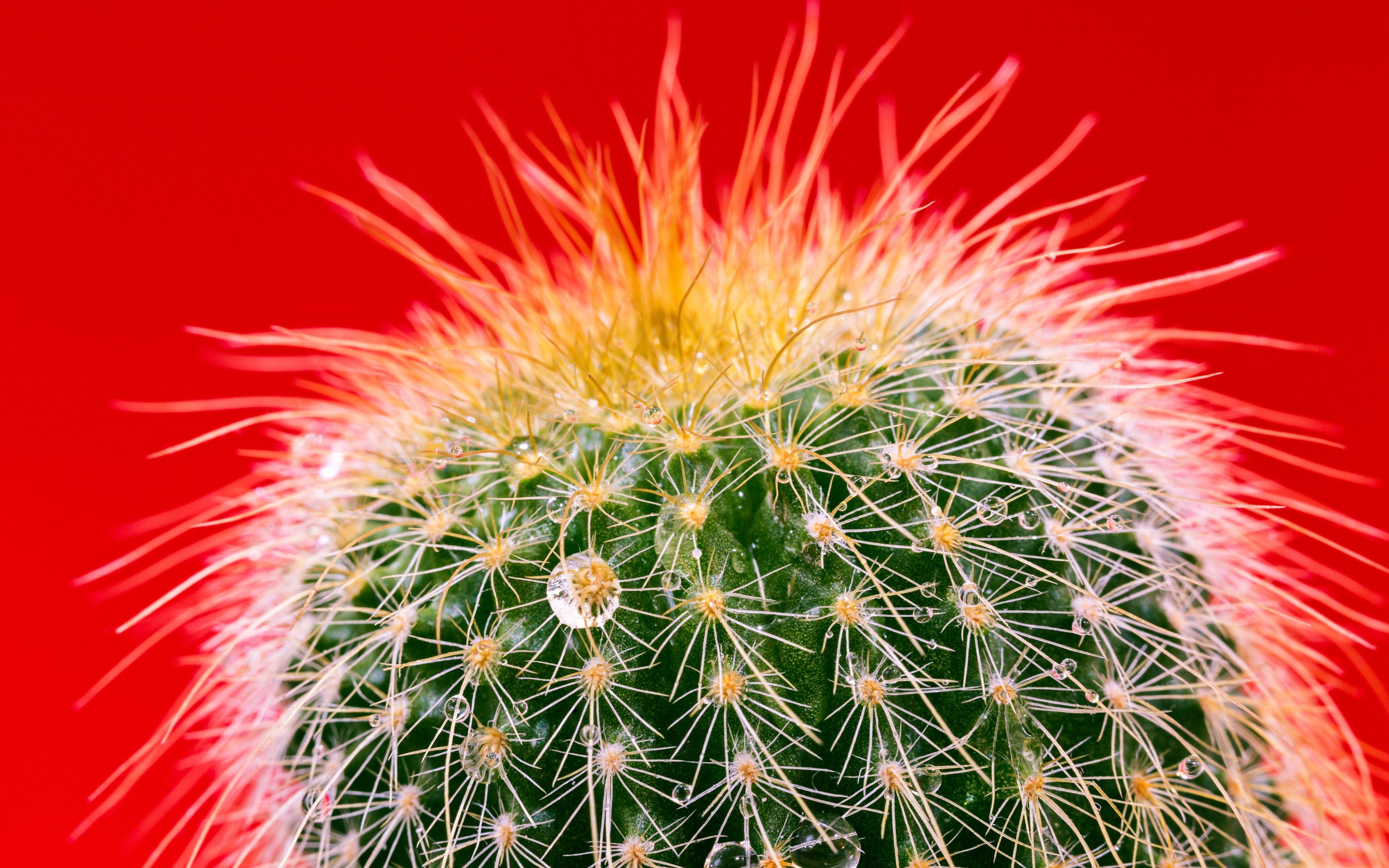 Fondos de pantalla Cactus de cerca