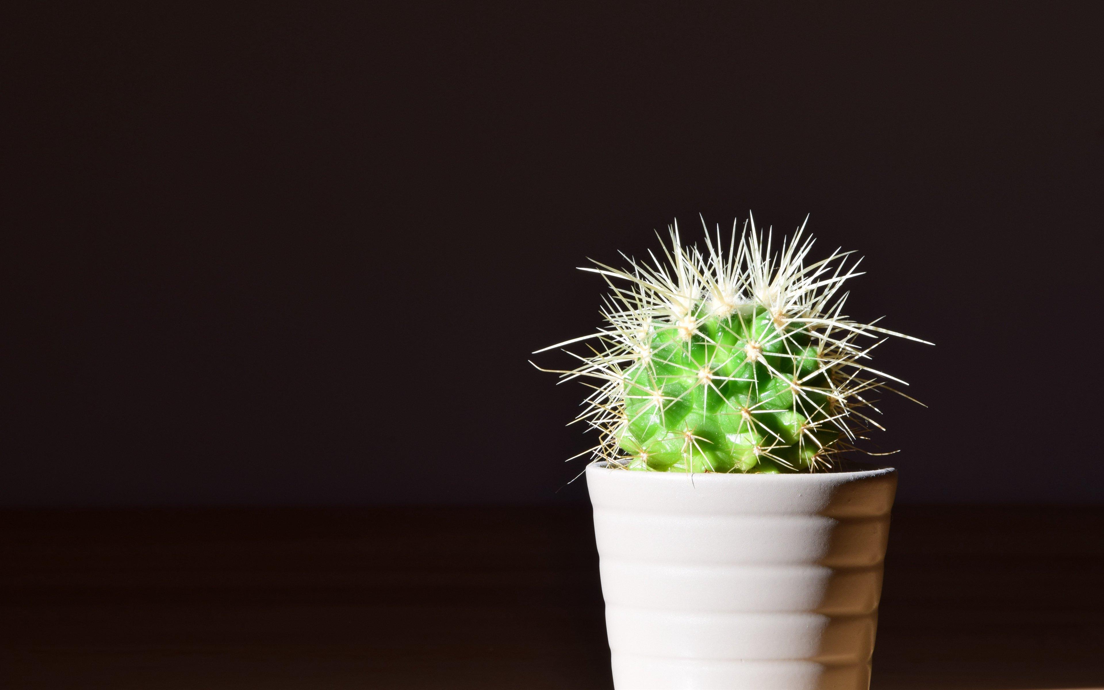 Fondos de pantalla Cactus en maceta