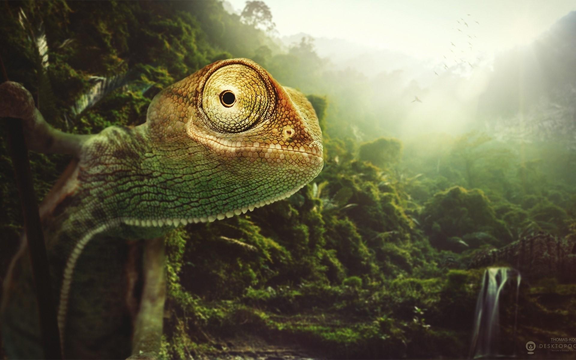 Wallpaper Chameleon