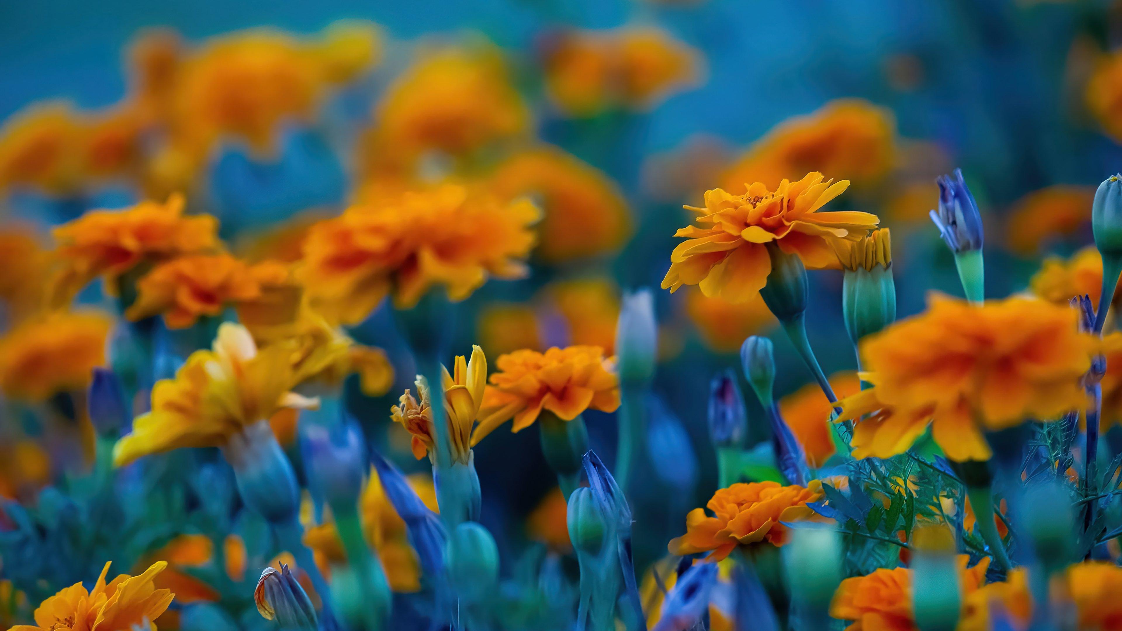 Fondos de pantalla Campo de flores amarillas