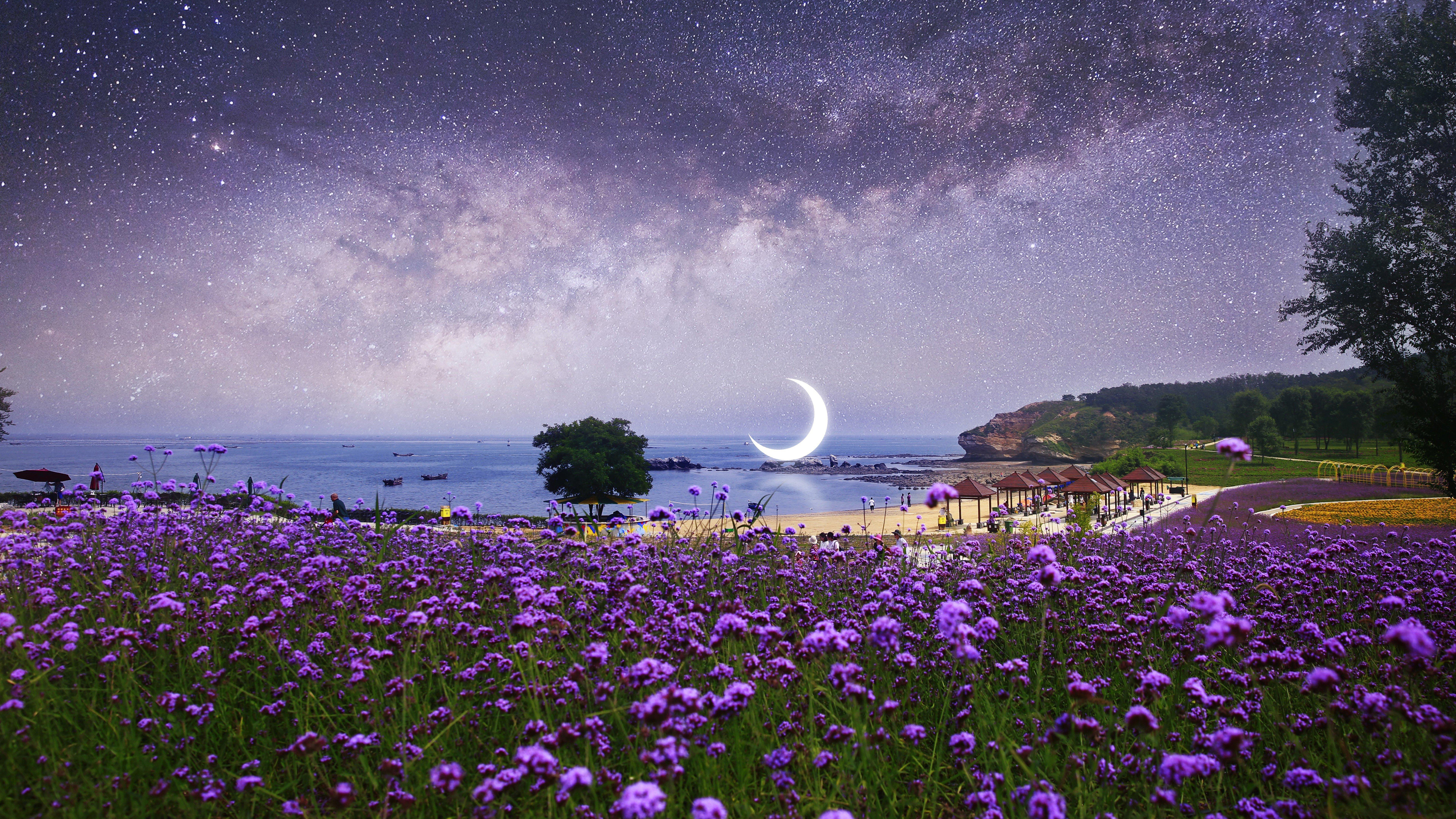 Fondos de pantalla Campo de lavanda en la playa bajo las estrellas