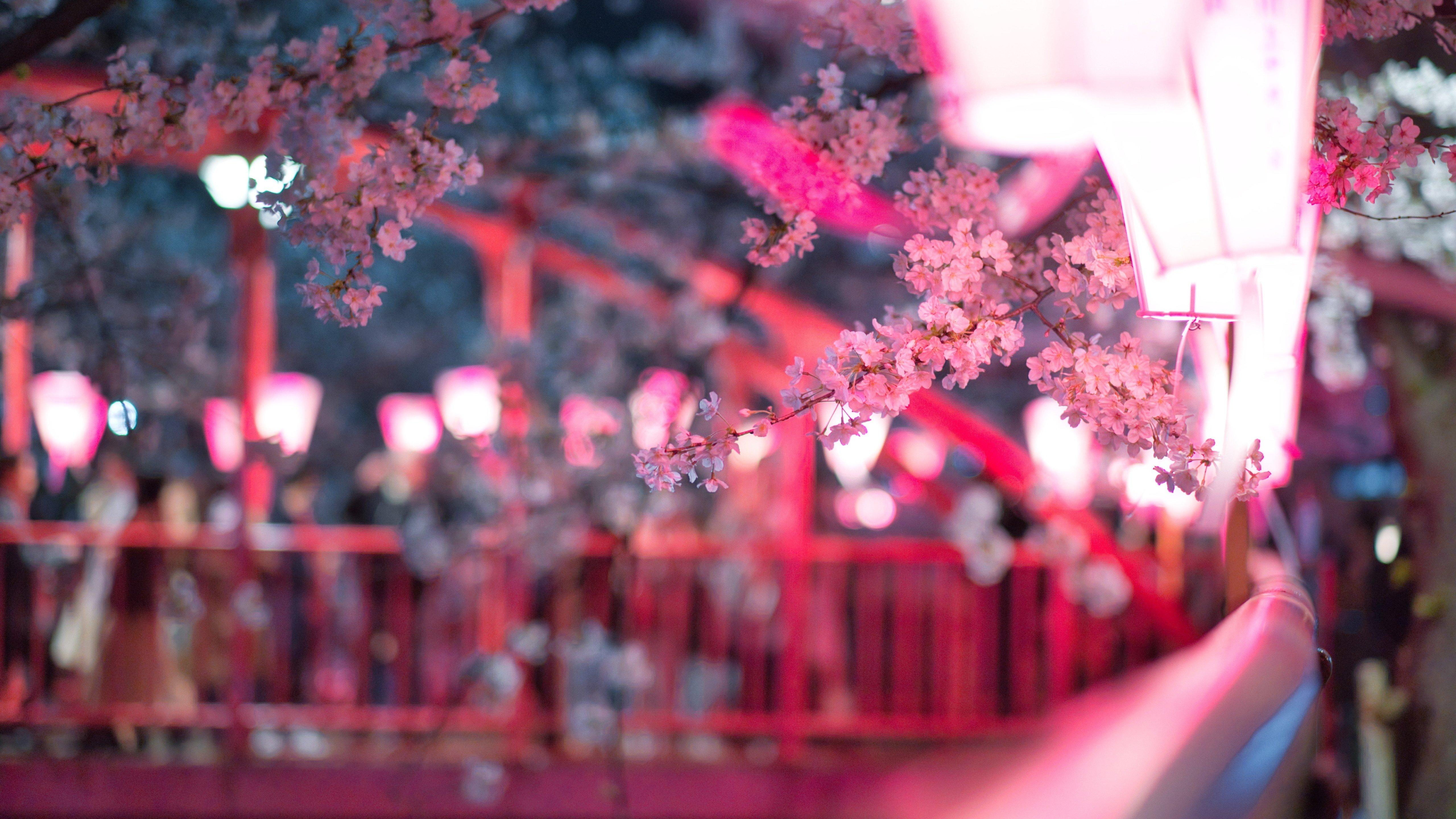 Fondos de pantalla Cerezo en calle con luces