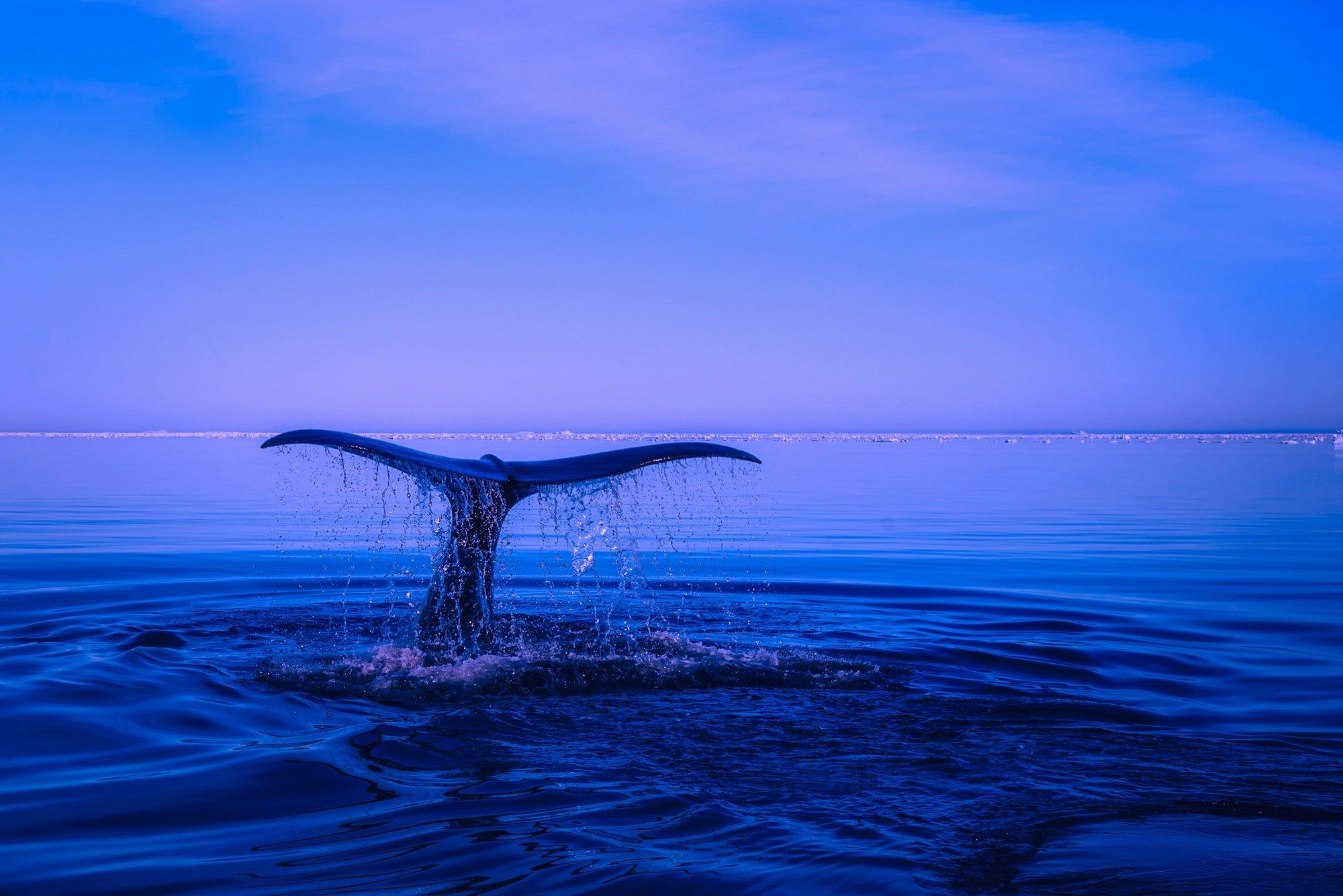 Fondos de pantalla Cola de una ballena en el oceano
