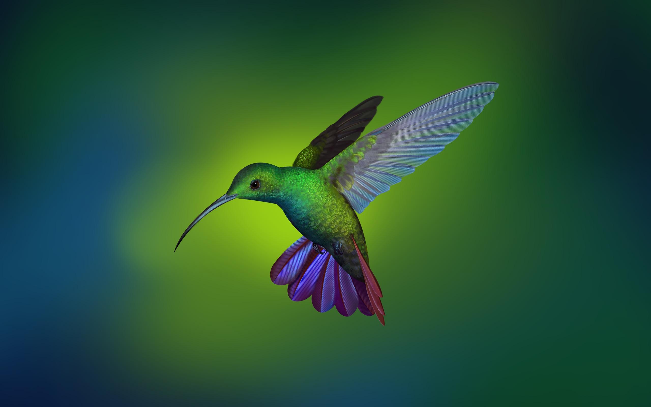 Wallpaper Hummingbird Digital Art