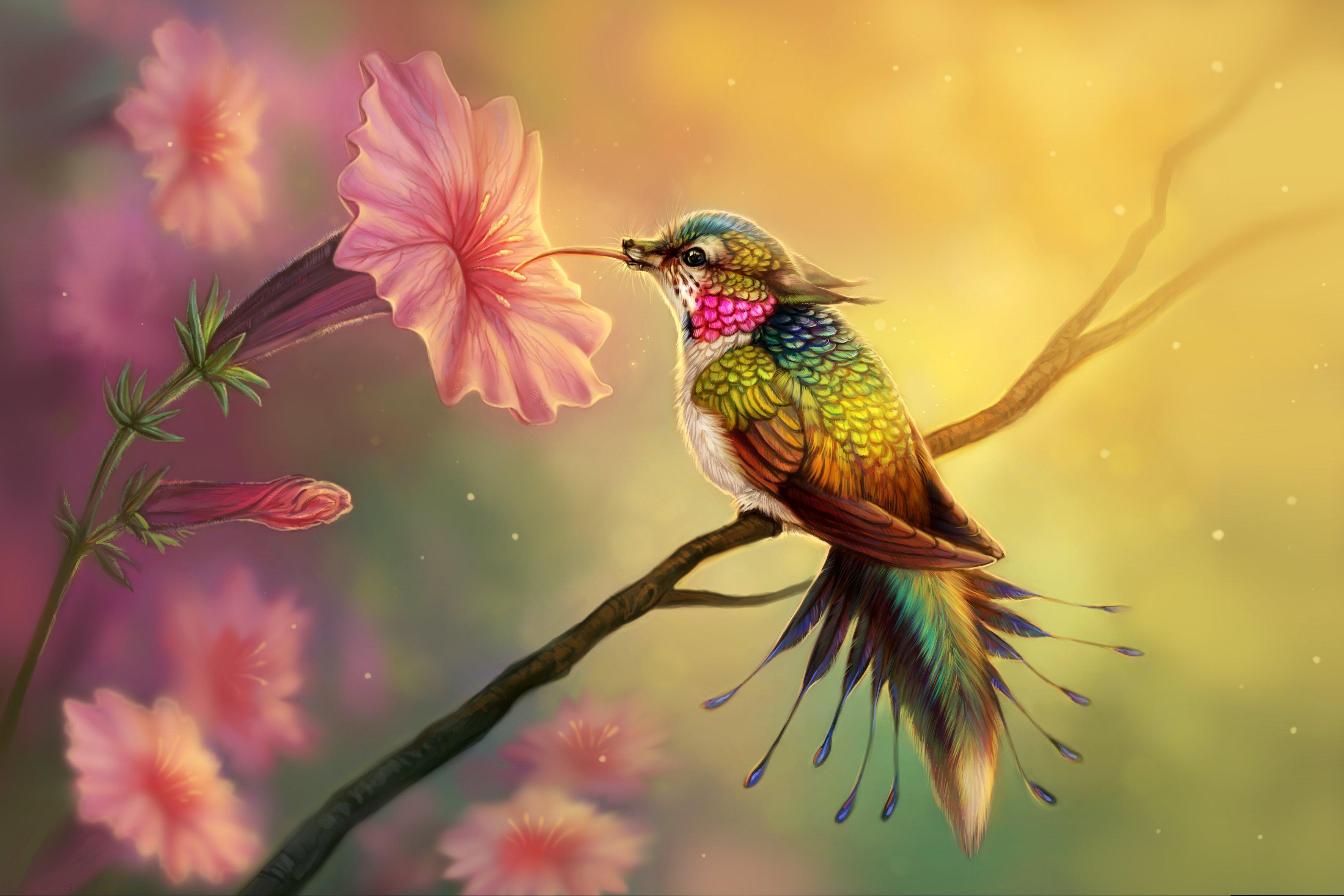 Wallpaper Fantasy Hummingbird