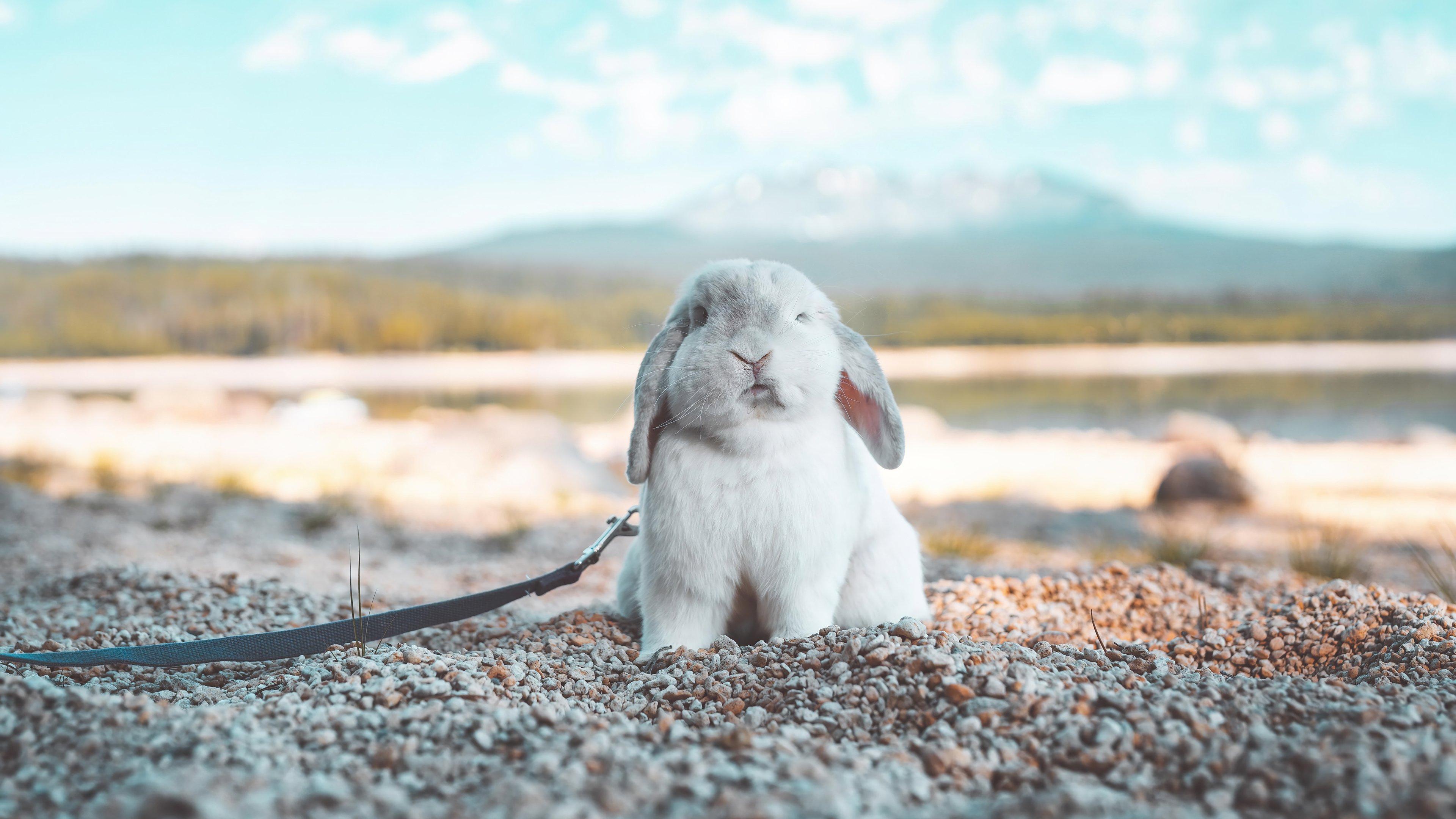 Fondos de pantalla Conejo