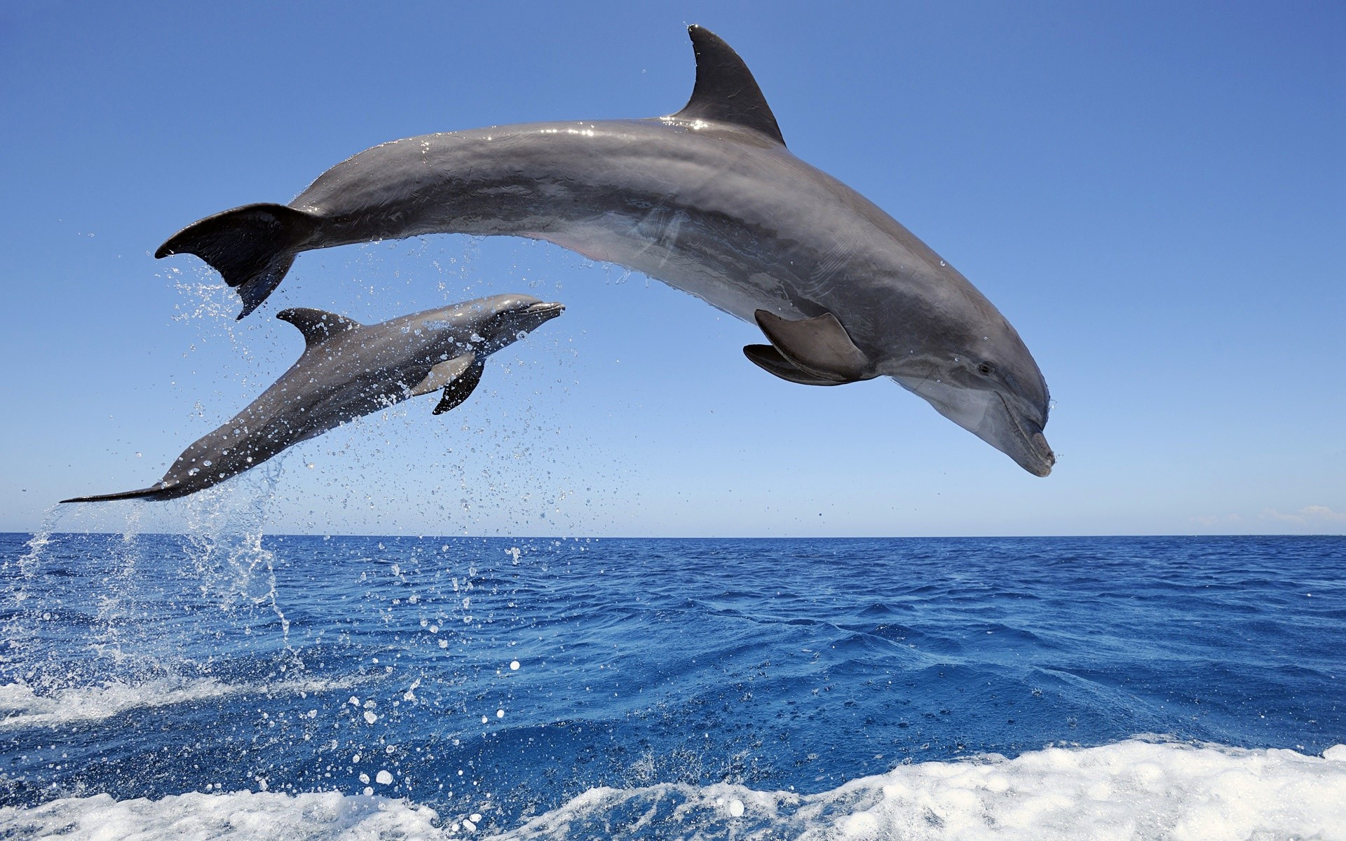 Dolphin Wallpaper Full Hd Id 612