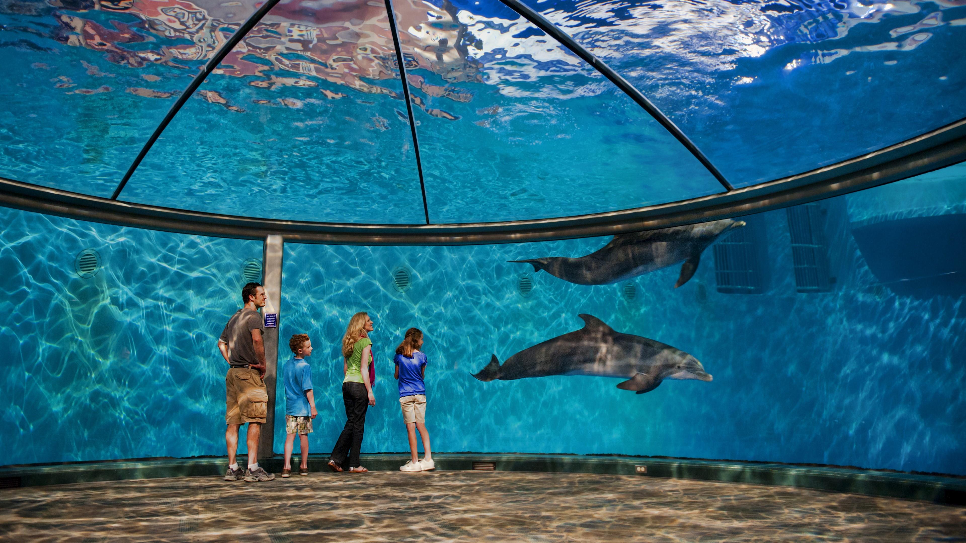 Fondos de pantalla Delfines del zoológico de Indianapolis