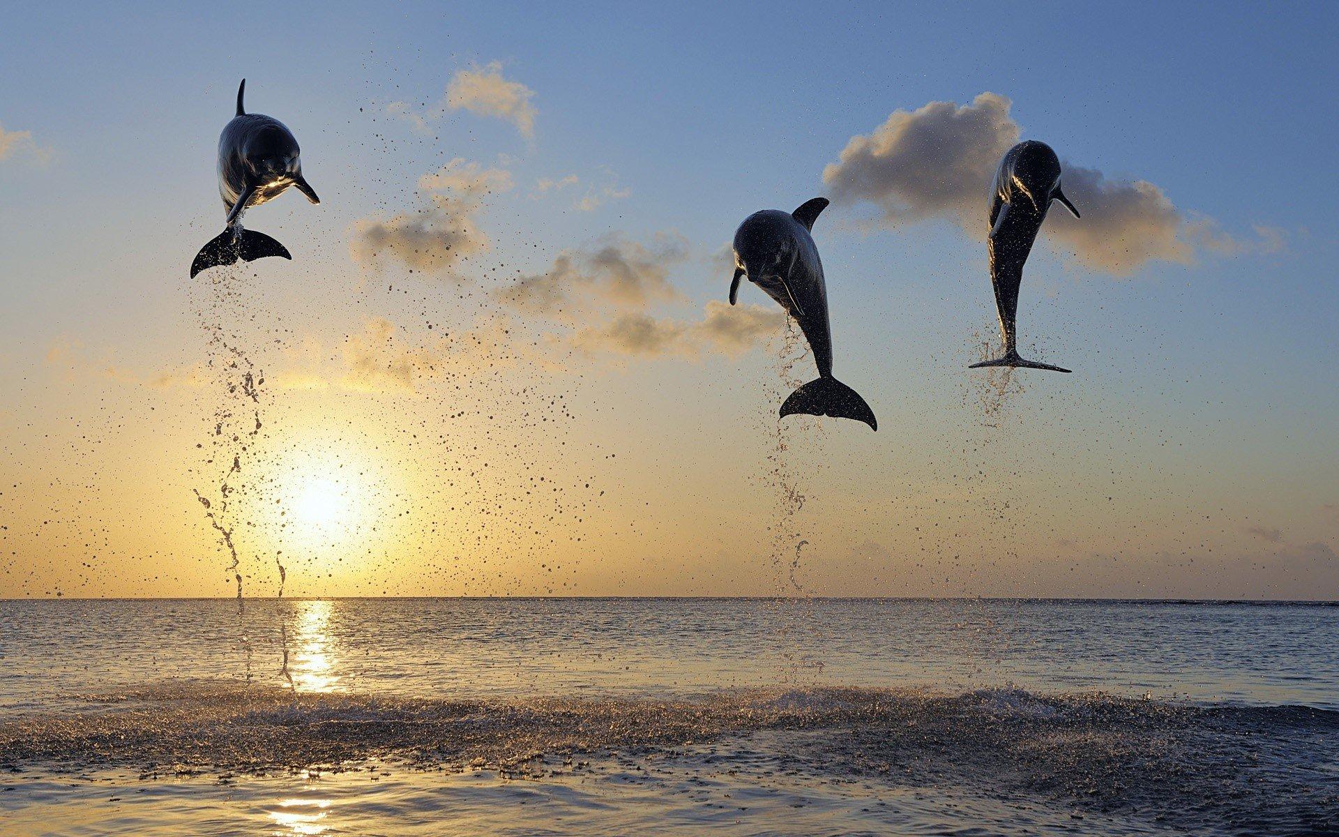 Fondo de pantalla de Delfines en islas Imágenes