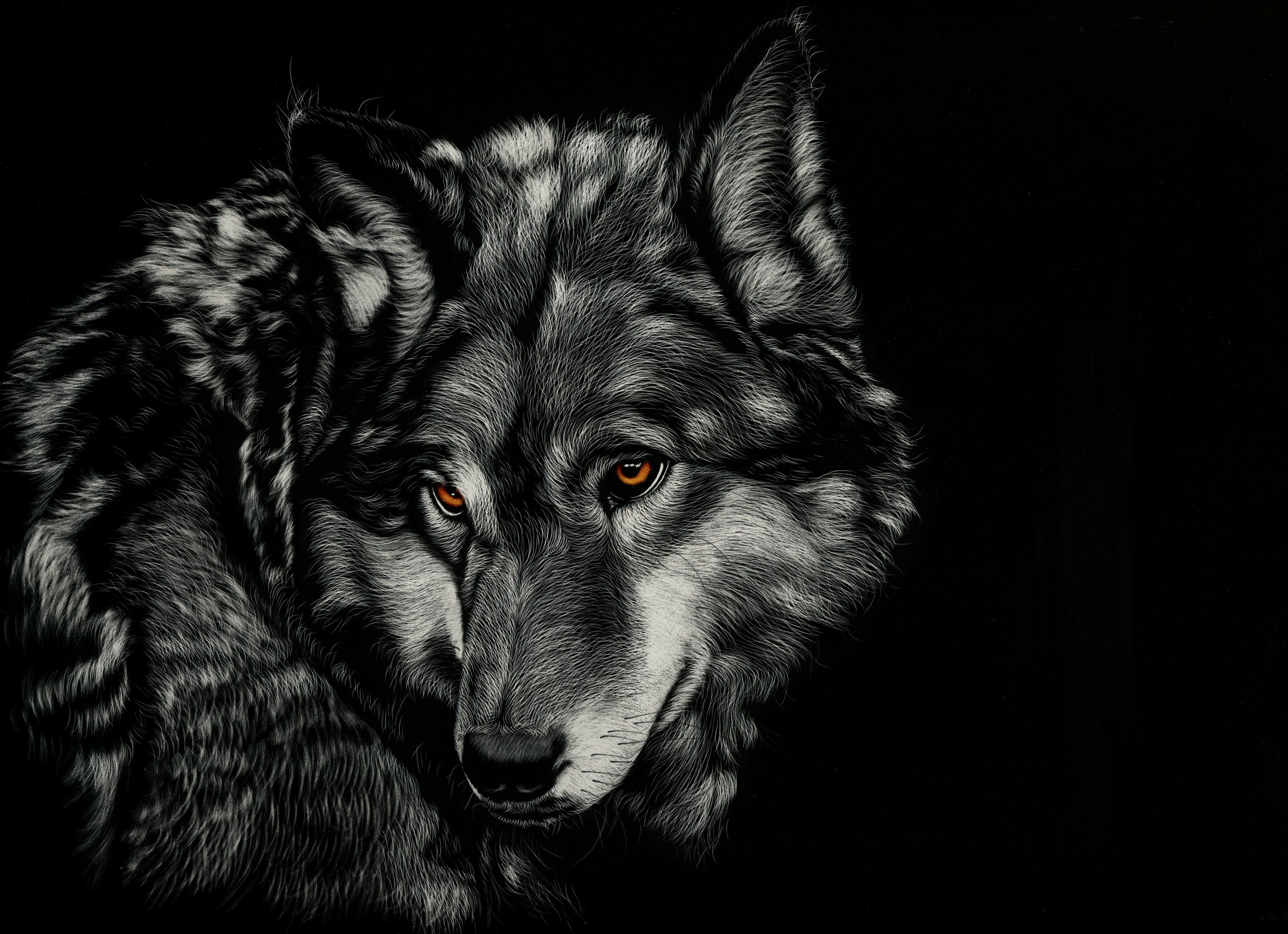 Fondos de pantalla Dibujo lobo