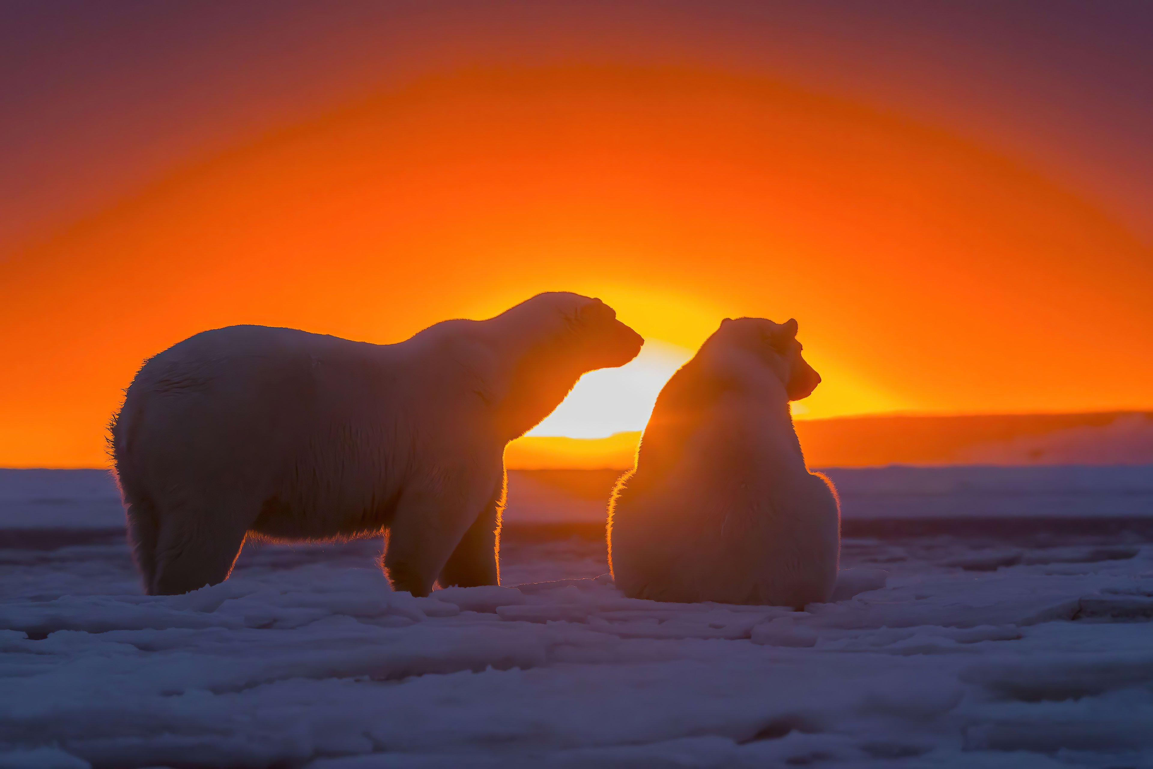 Fondos de pantalla Dos osos polares viendo el atardecer
