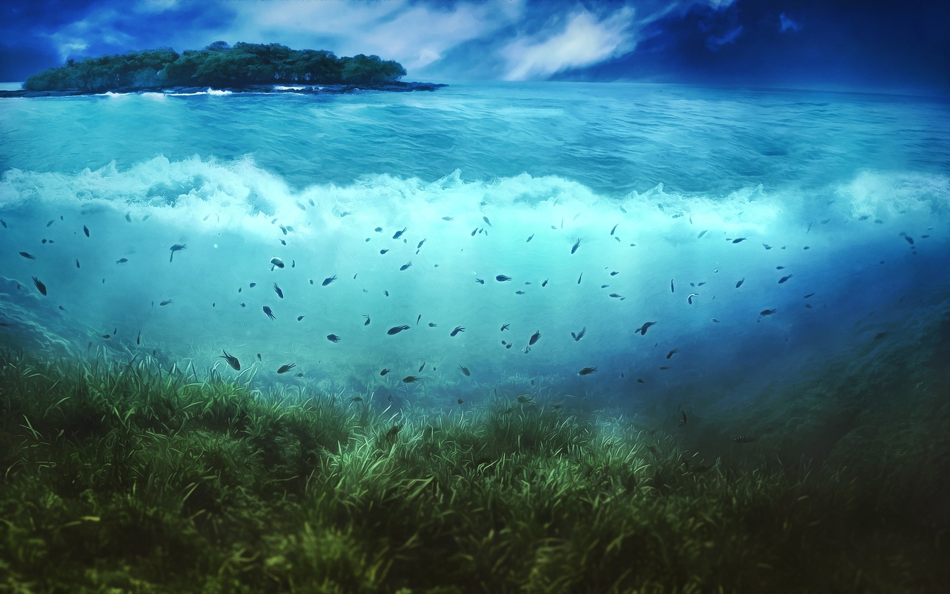 Wallpaper The world of the sea