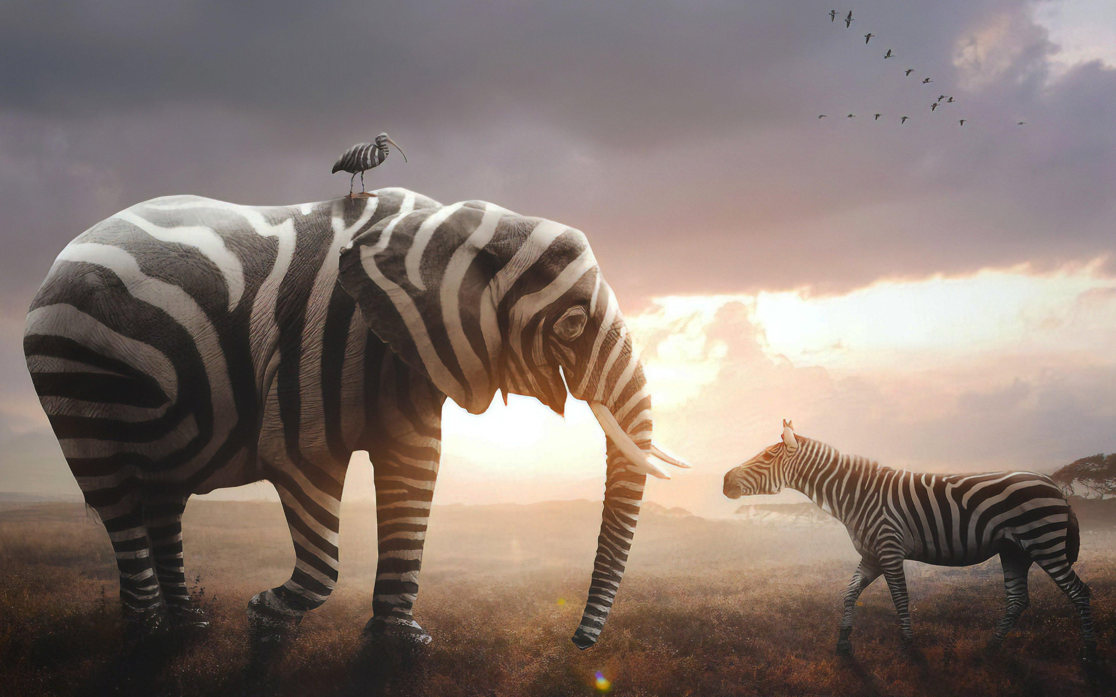 Fondos de pantalla Elefante y Cebra
