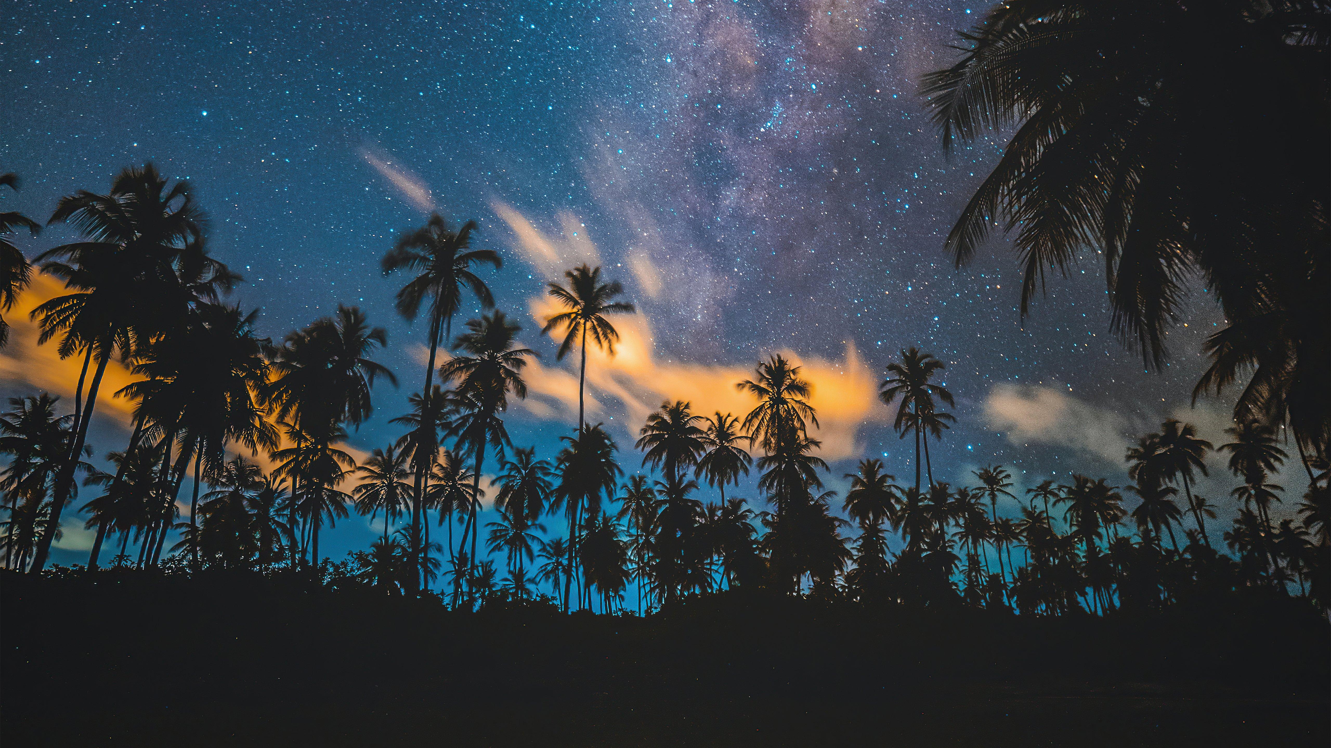 Fondos de pantalla Estrellas con palmas tropicales