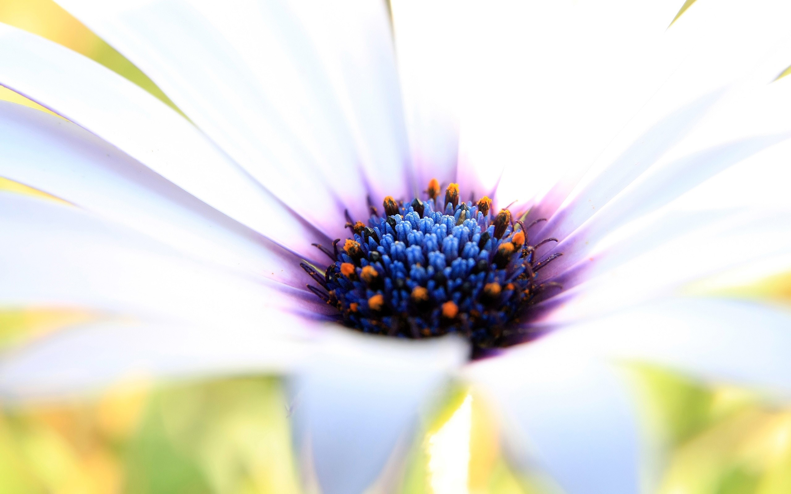 Wallpaper White and purple flower