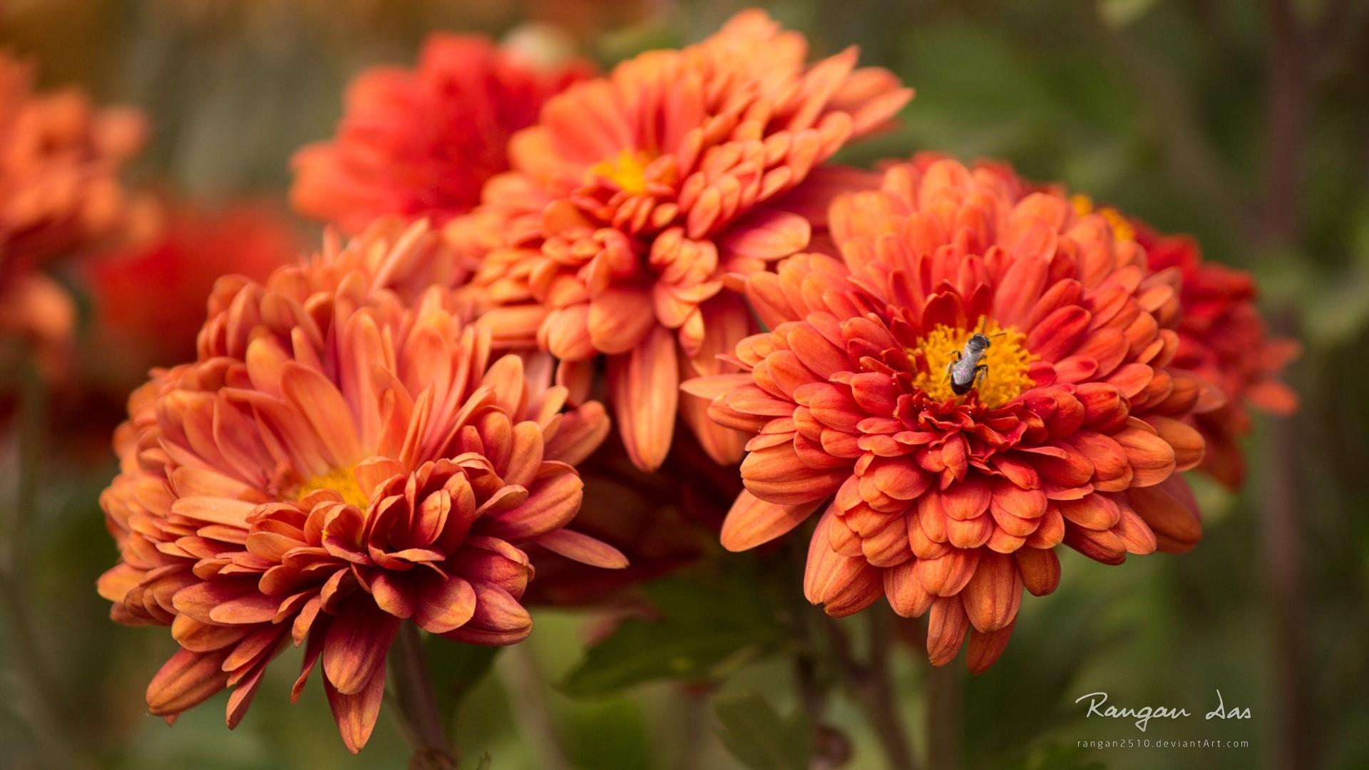 Fondos de pantalla Flor bug
