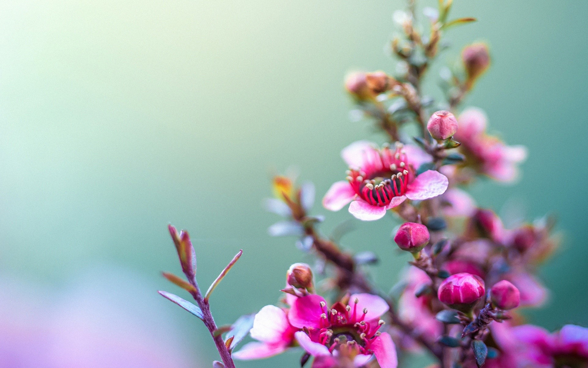Color Rosa Flores