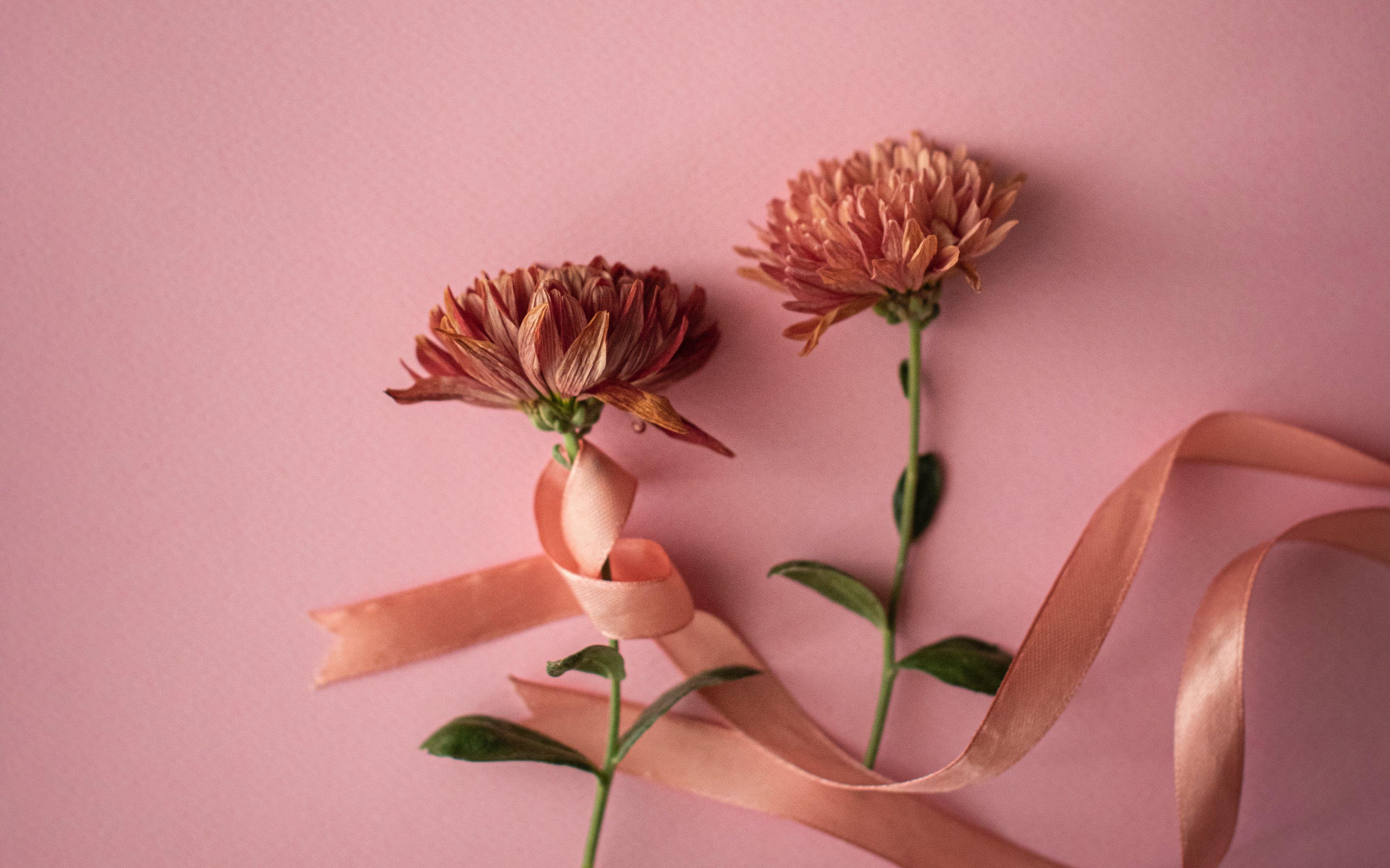 Fondos de pantalla Flores con listón rosa