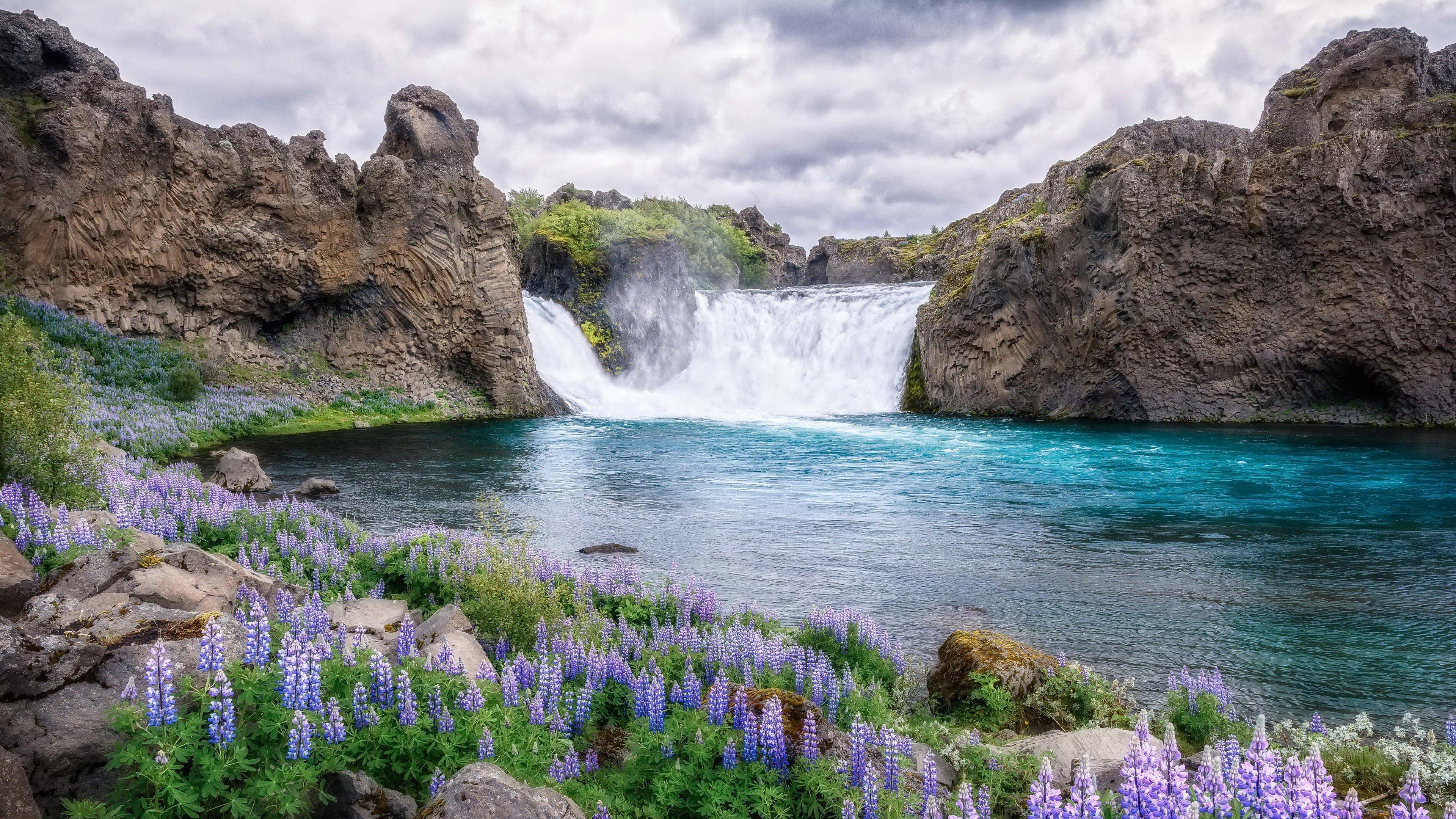 Fondos de pantalla Flores en lago y montañas