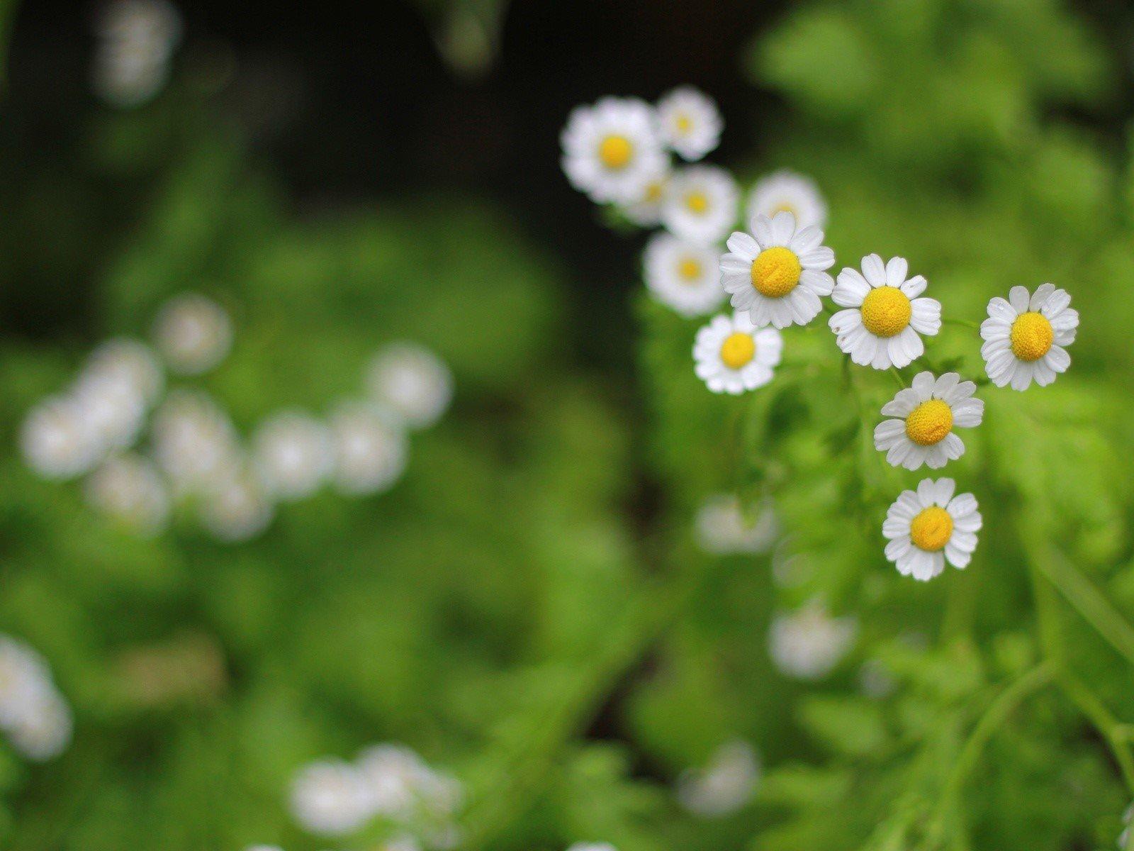 Wallpaper Flowers in a garden