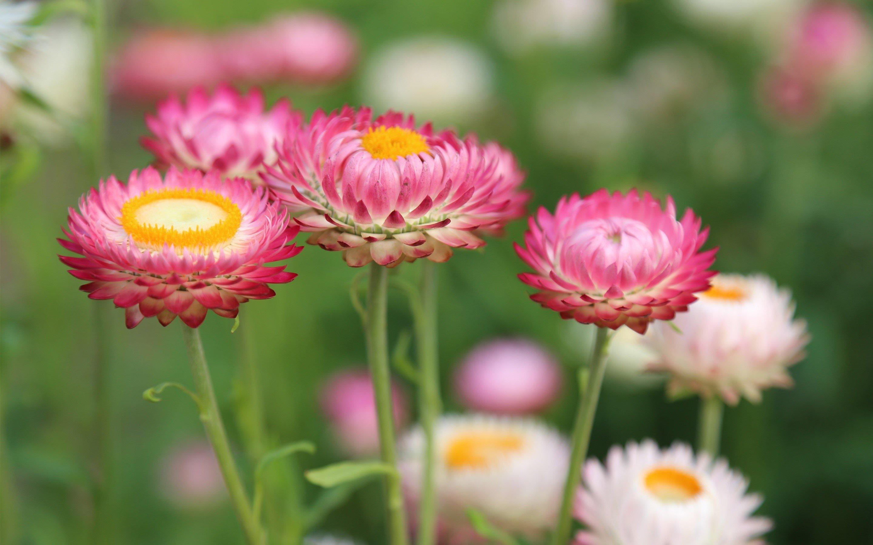 Fondo de pantalla de Flores en un prado Imágenes