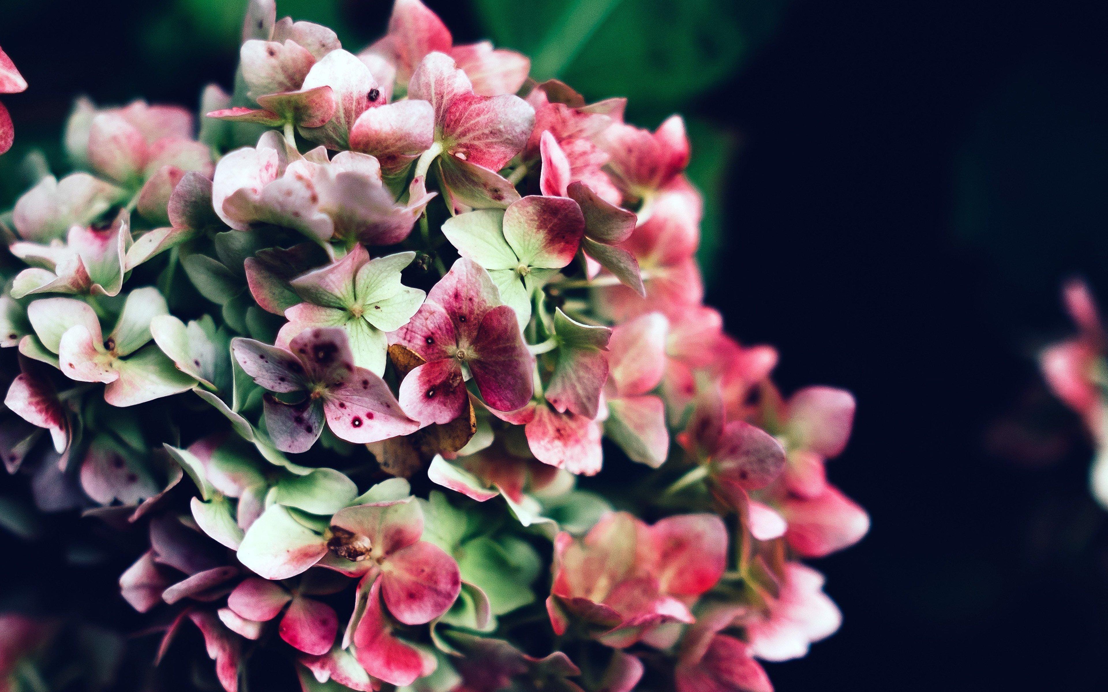 Fondos de pantalla Flores rosa