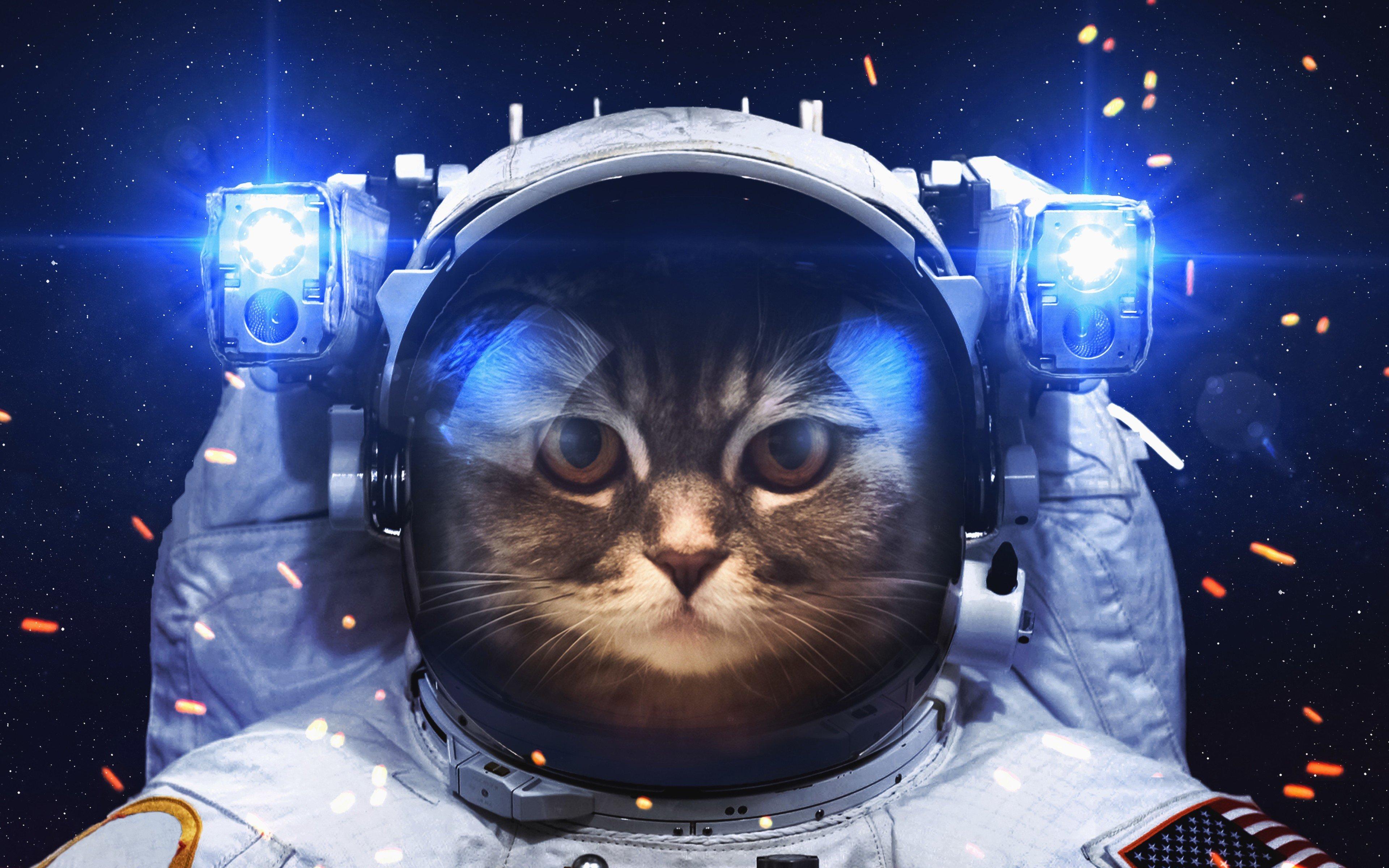 Wallpaper Astronaut Cat
