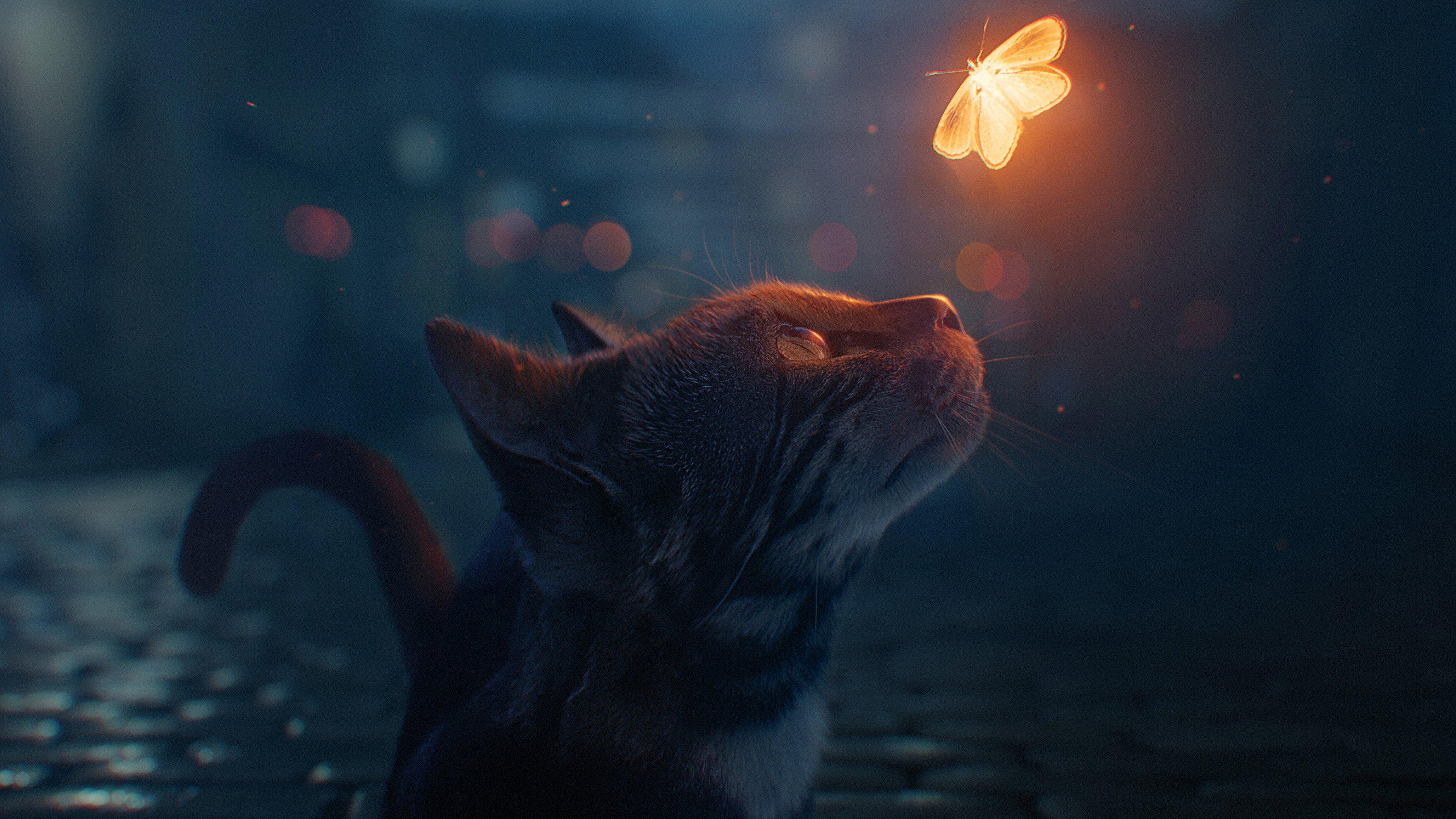 Fondos de pantalla Gato con mariposa de fantasía
